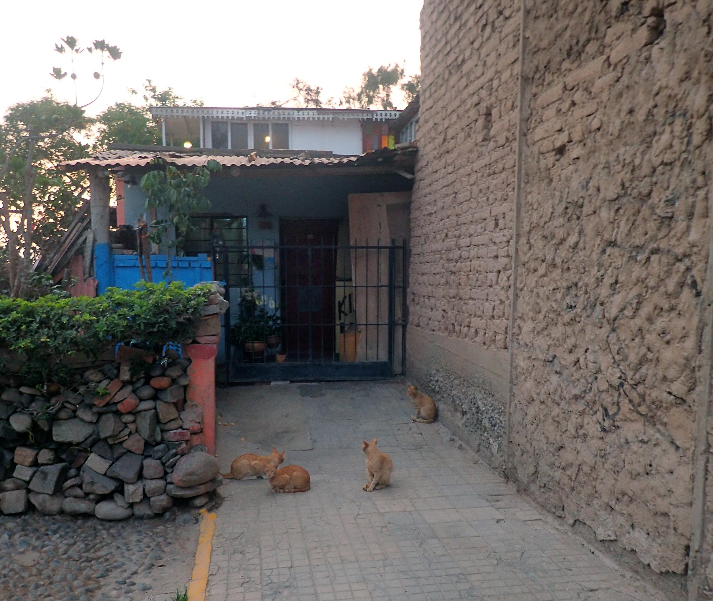 friendly cats.jpg