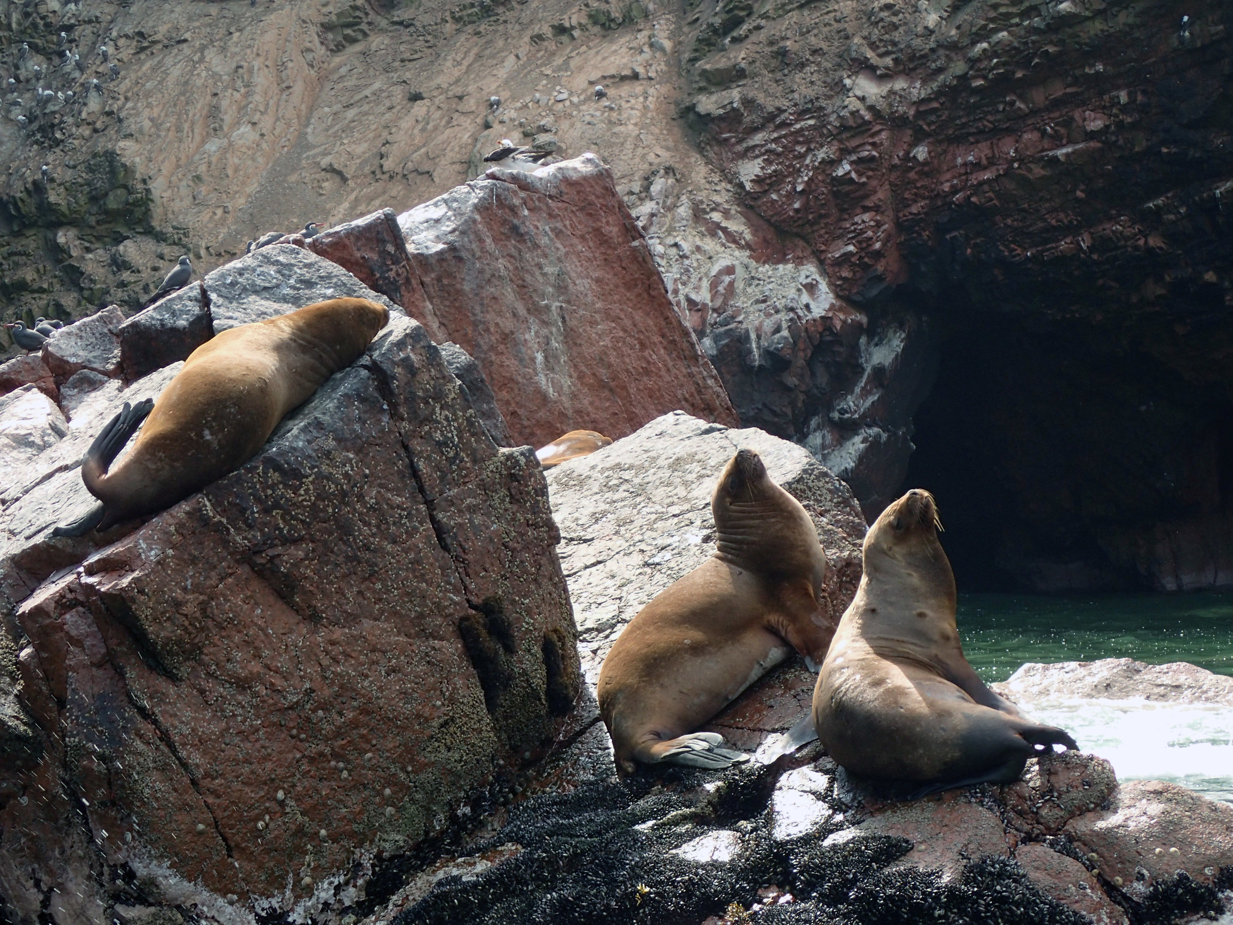 another good sea lion shot.jpg