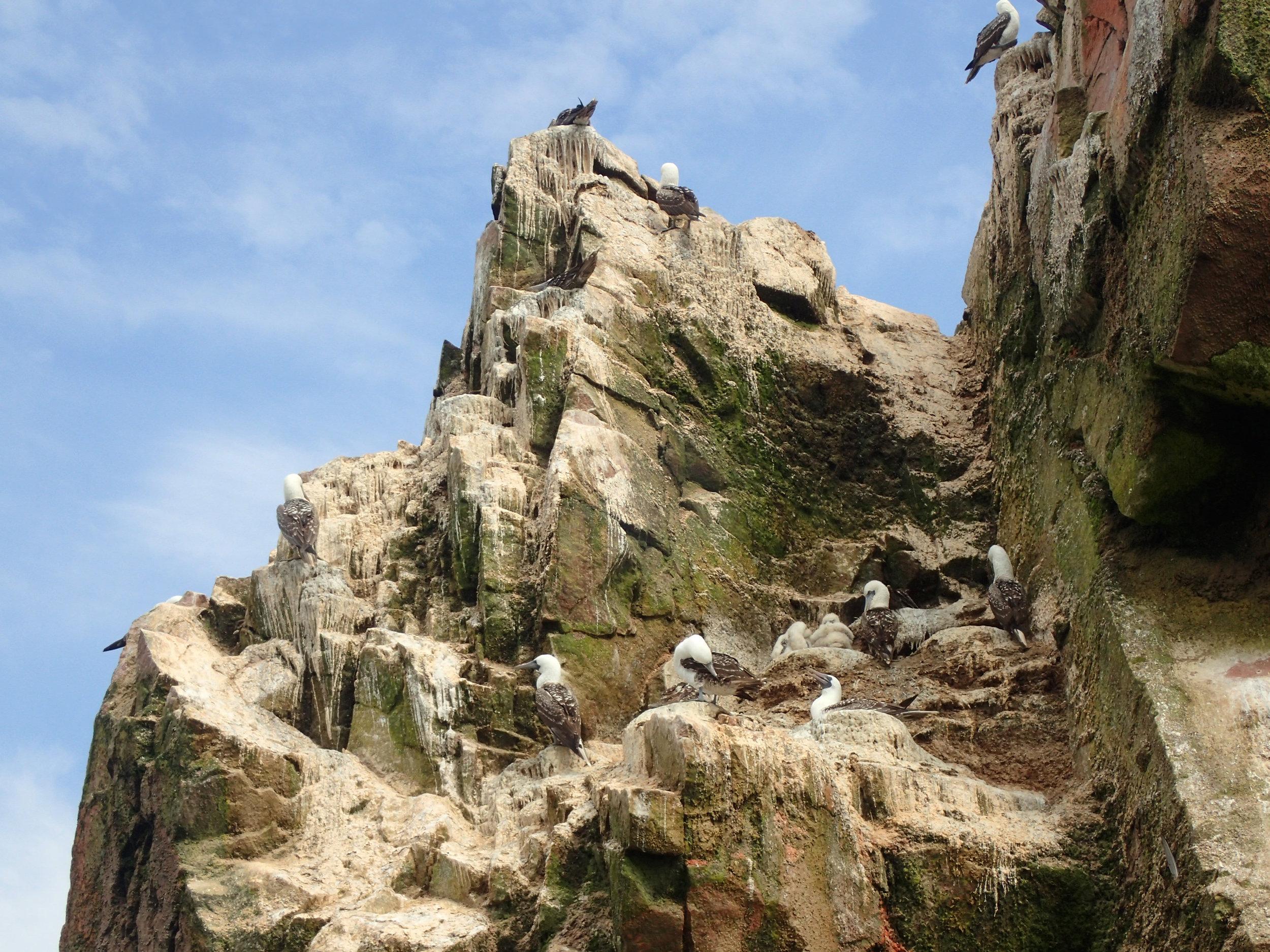 baby seagulls.jpg
