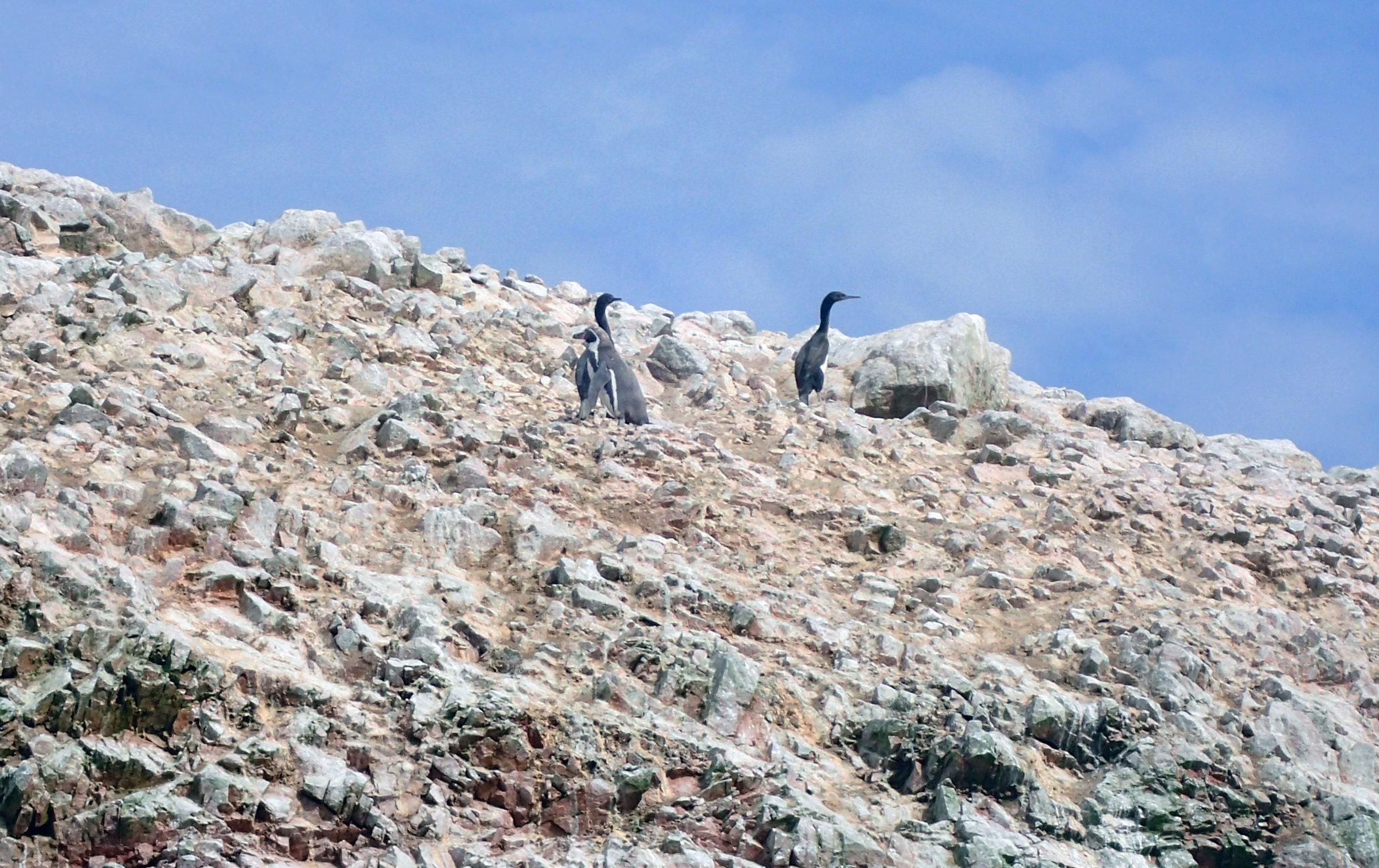 lonely penguin.jpg