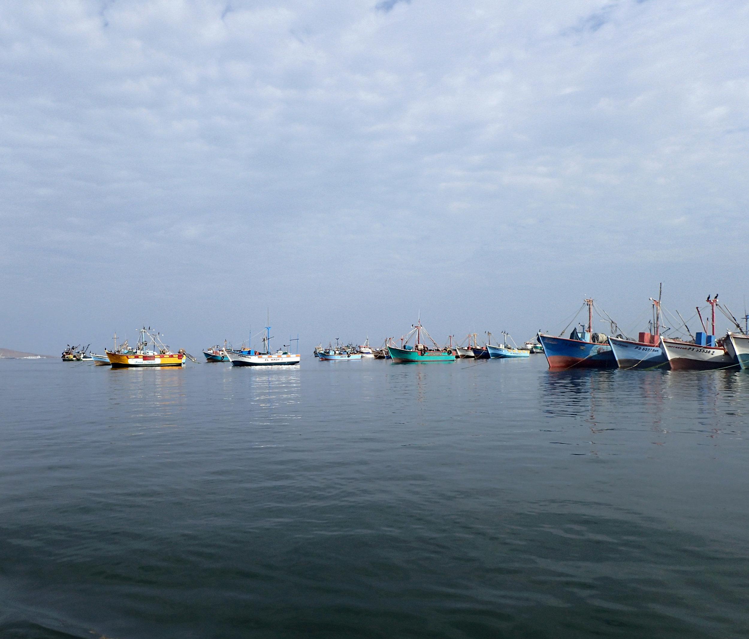 Paracas Marina.jpg