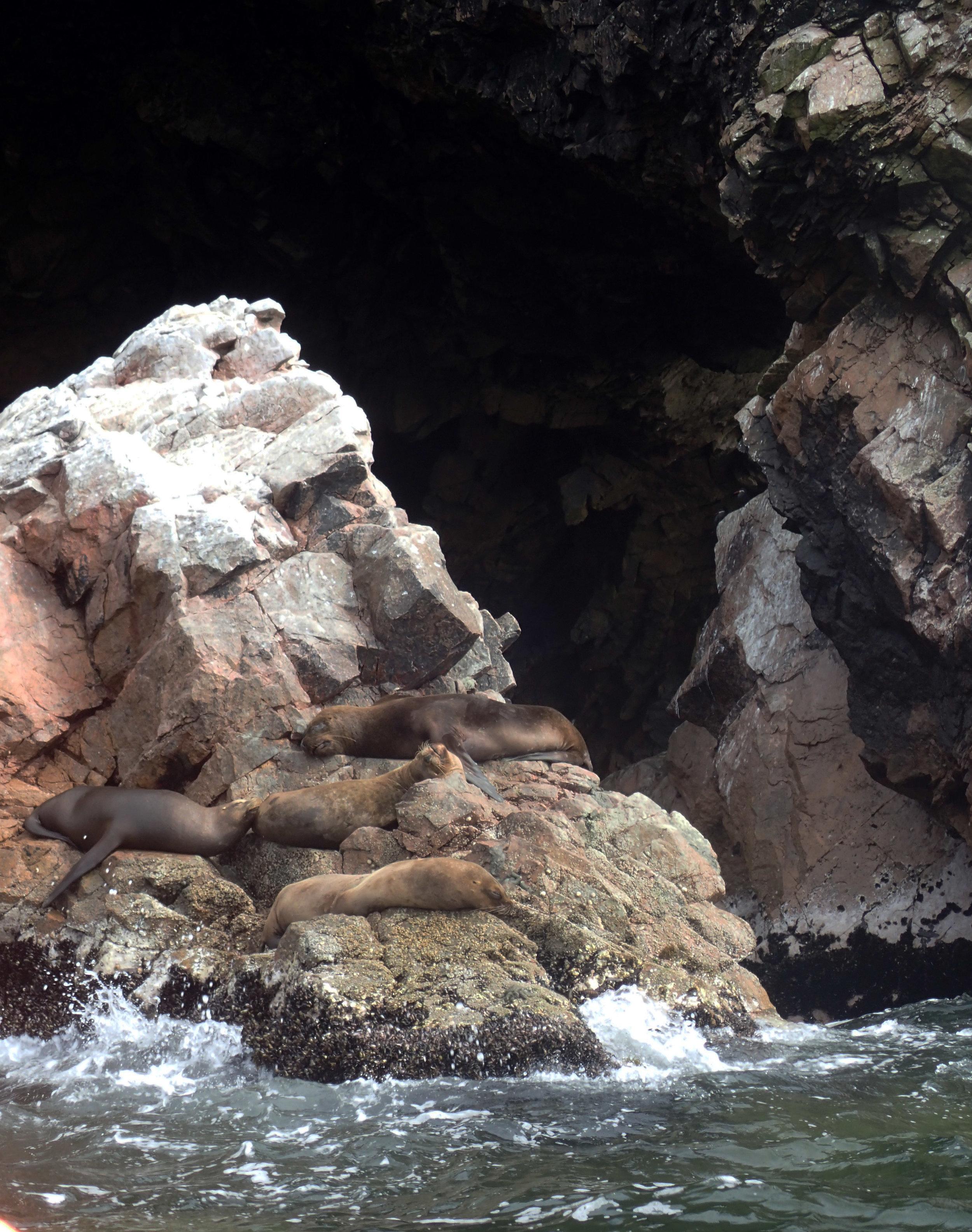 sea lions at Islas Ballestas.jpg