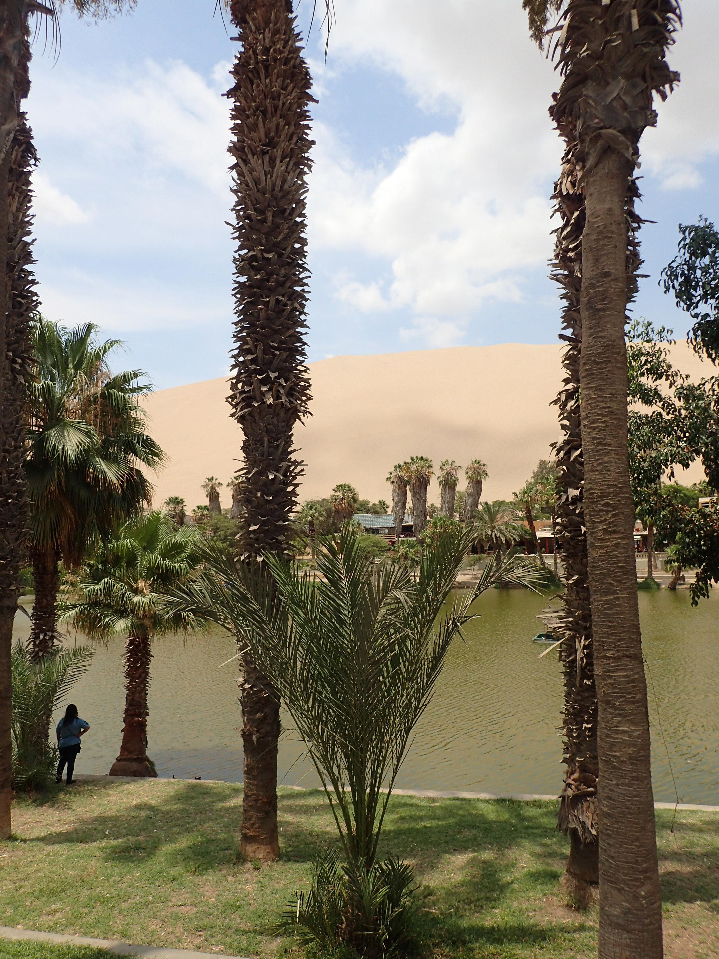 a literal oasis in the desert.jpg