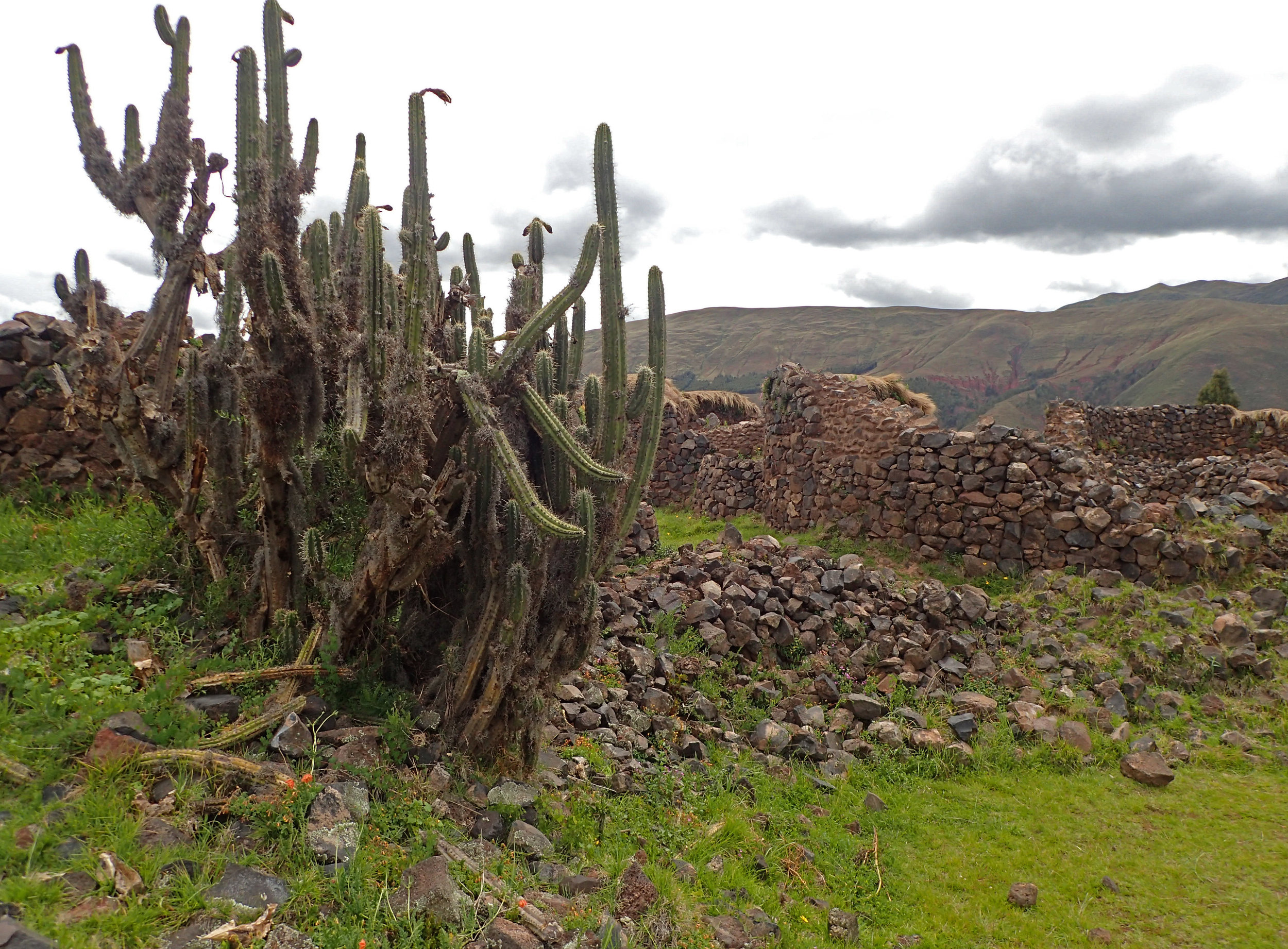 cactus and ruins.jpg