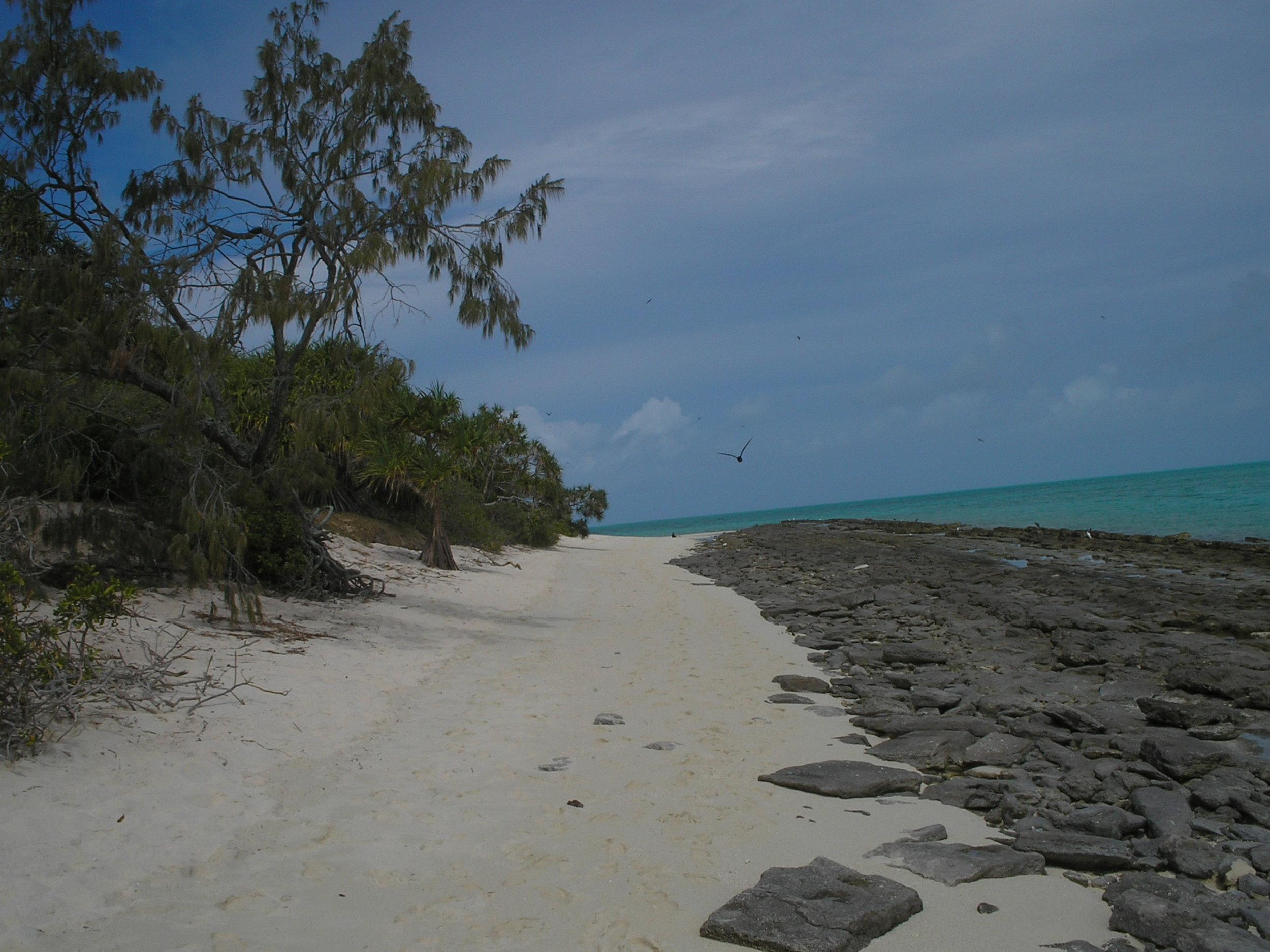 heron island 2.JPG