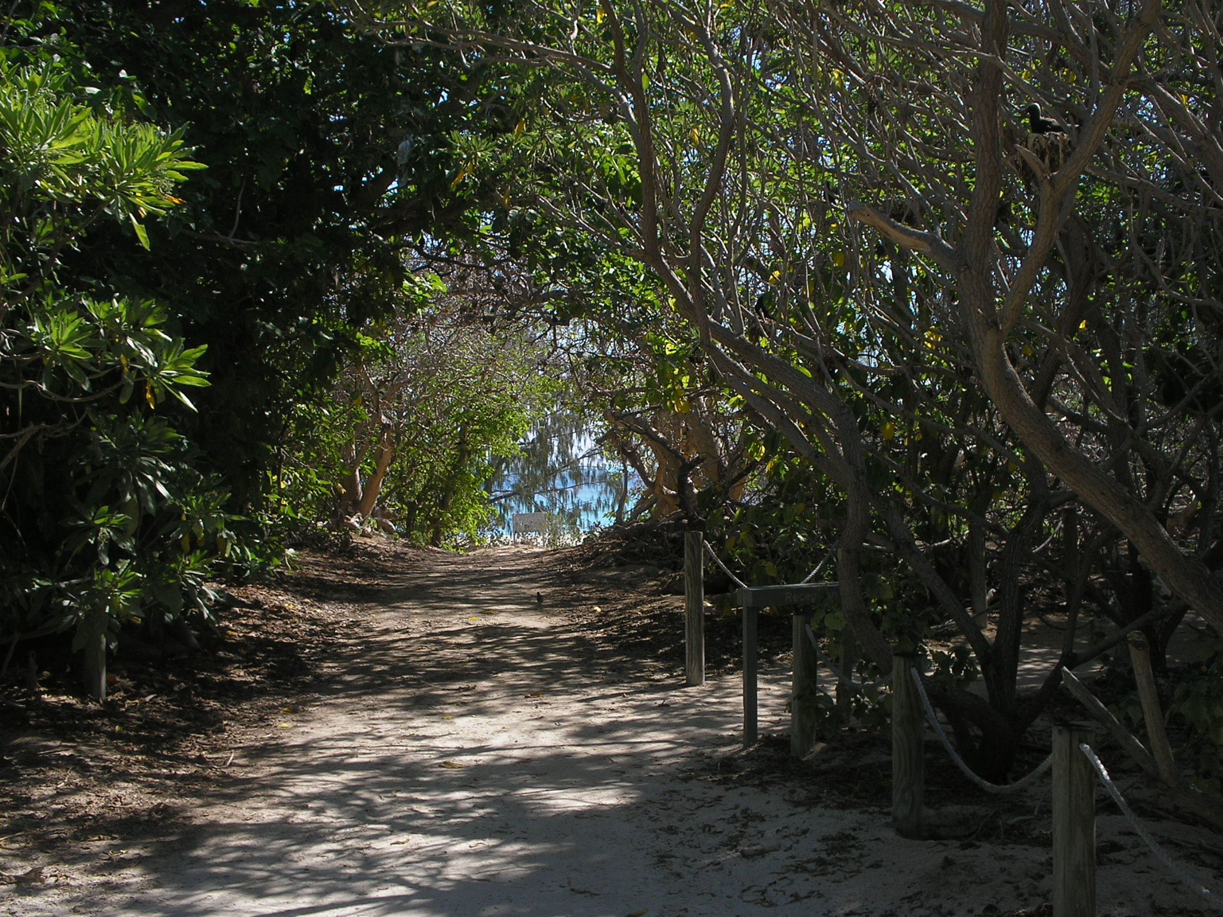 heron island 6.JPG