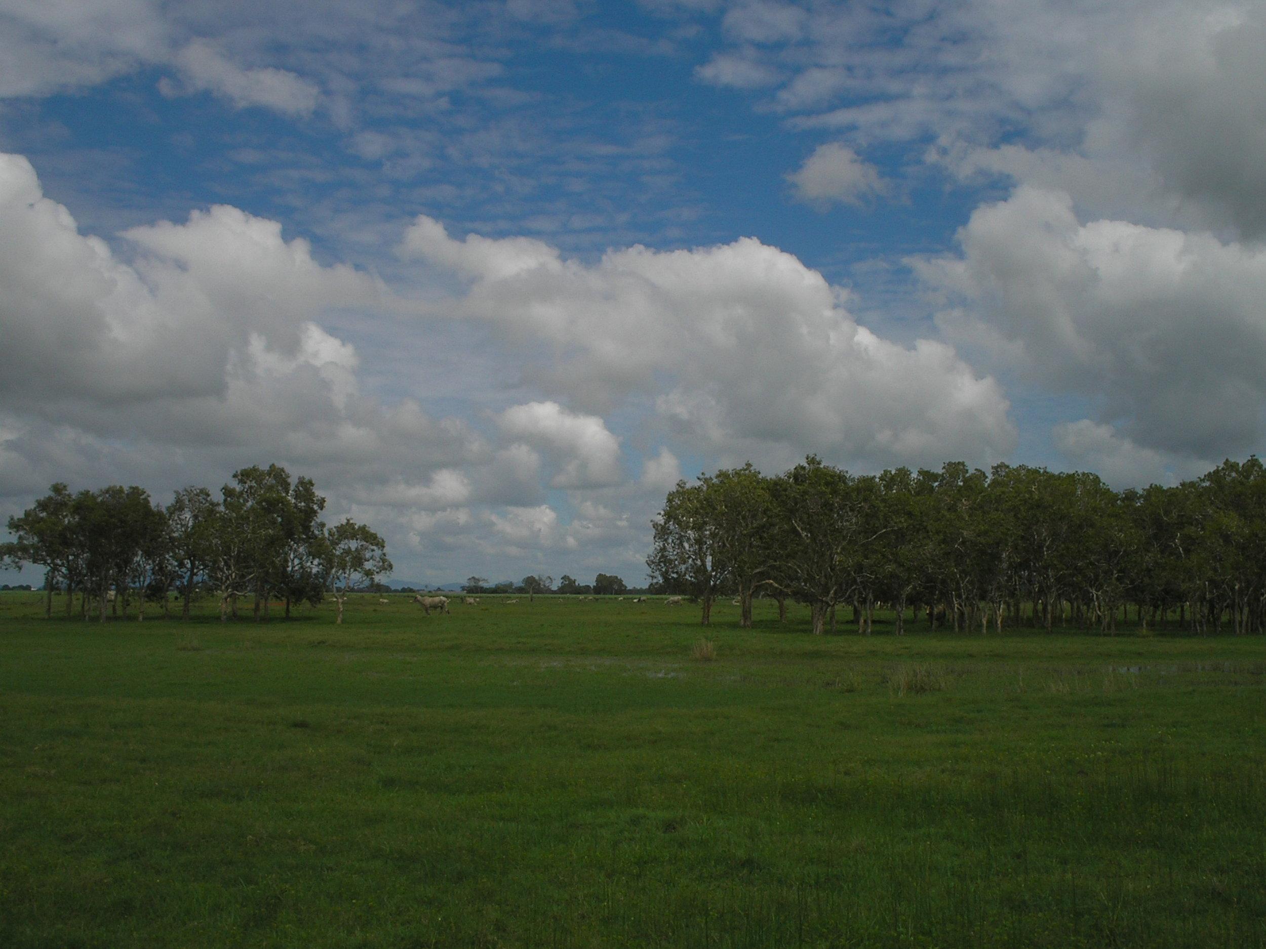proserpine farmland.JPG