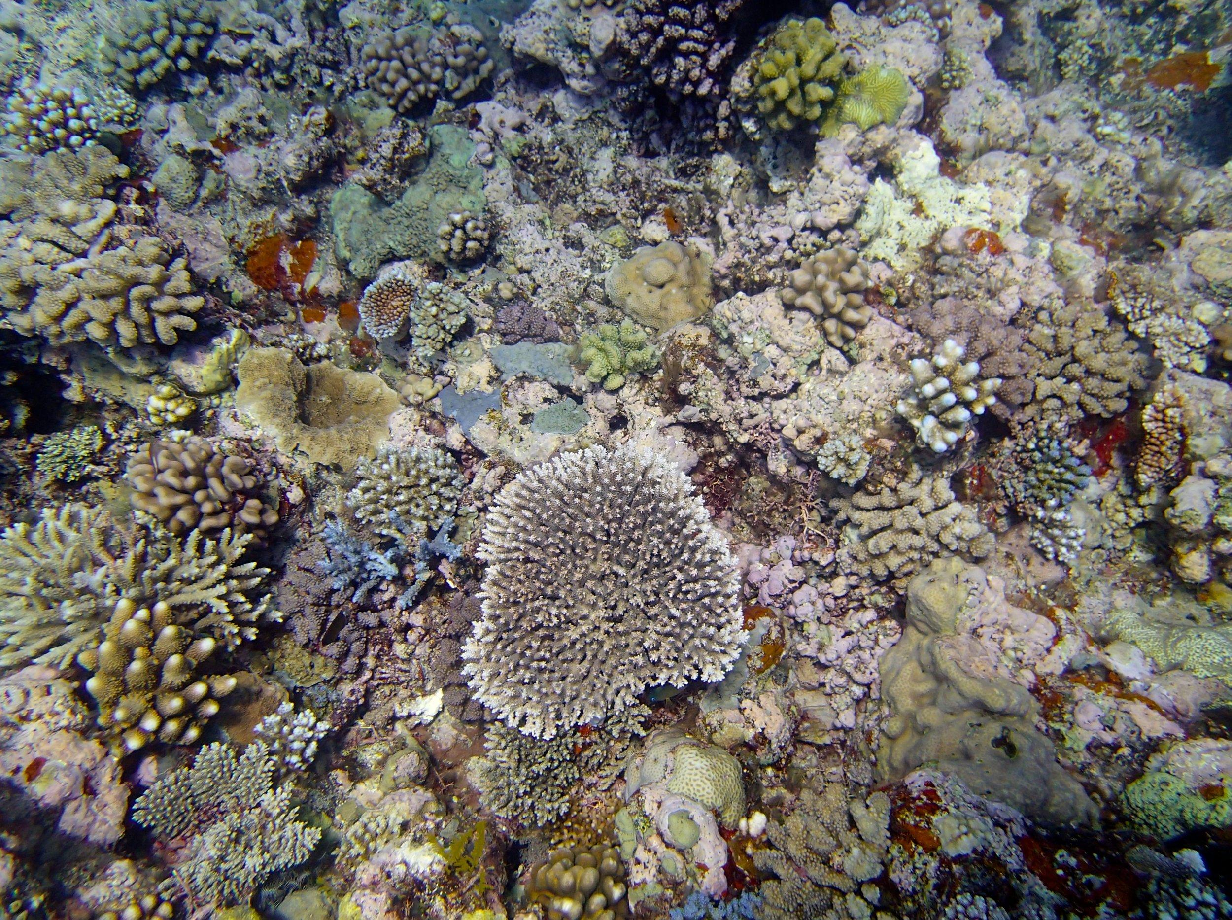 high coral diversity.jpg