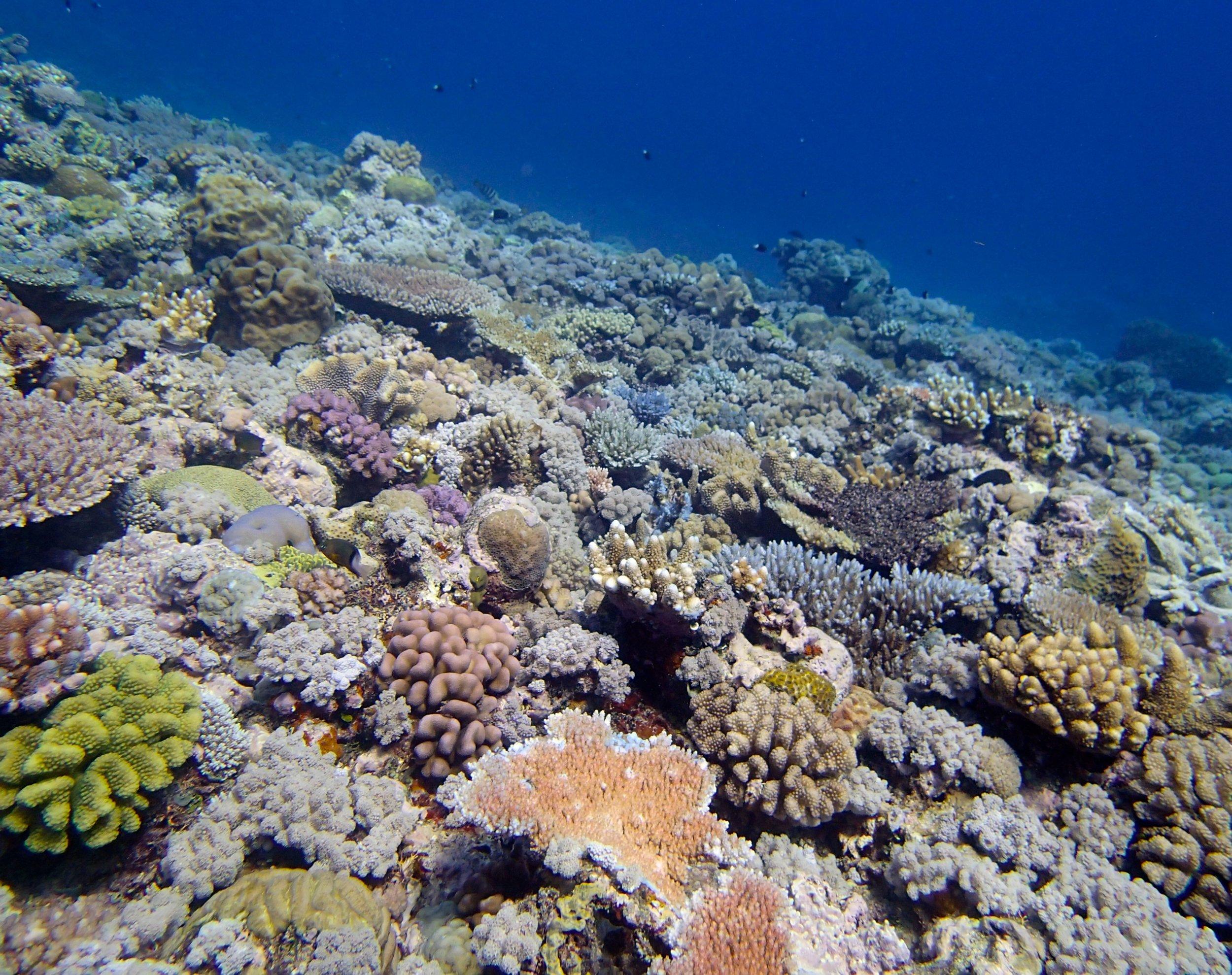 Jewell Reef 9-12-14.jpg