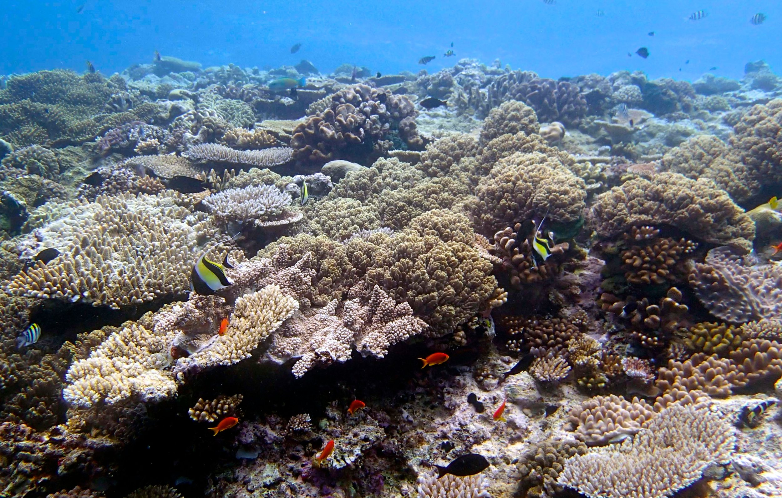 5 m at Wood Reef.jpg
