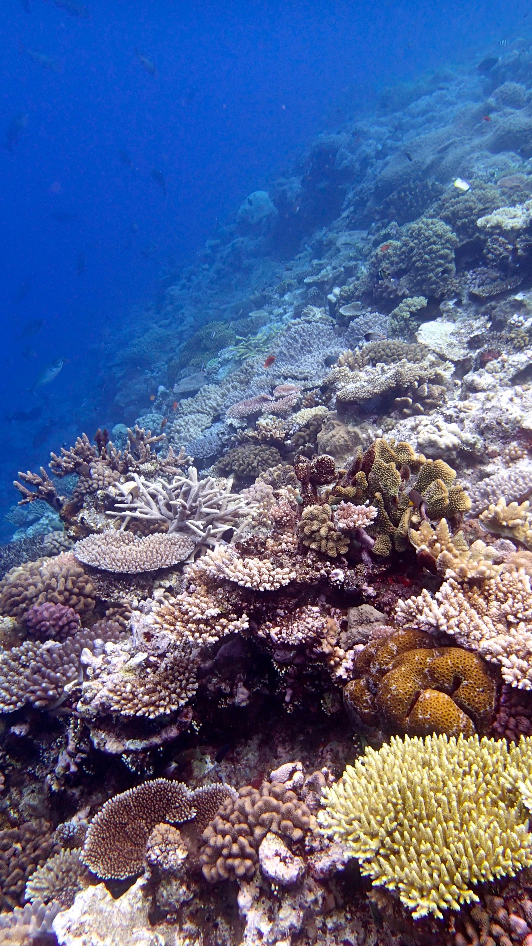 best reef of trip.jpg