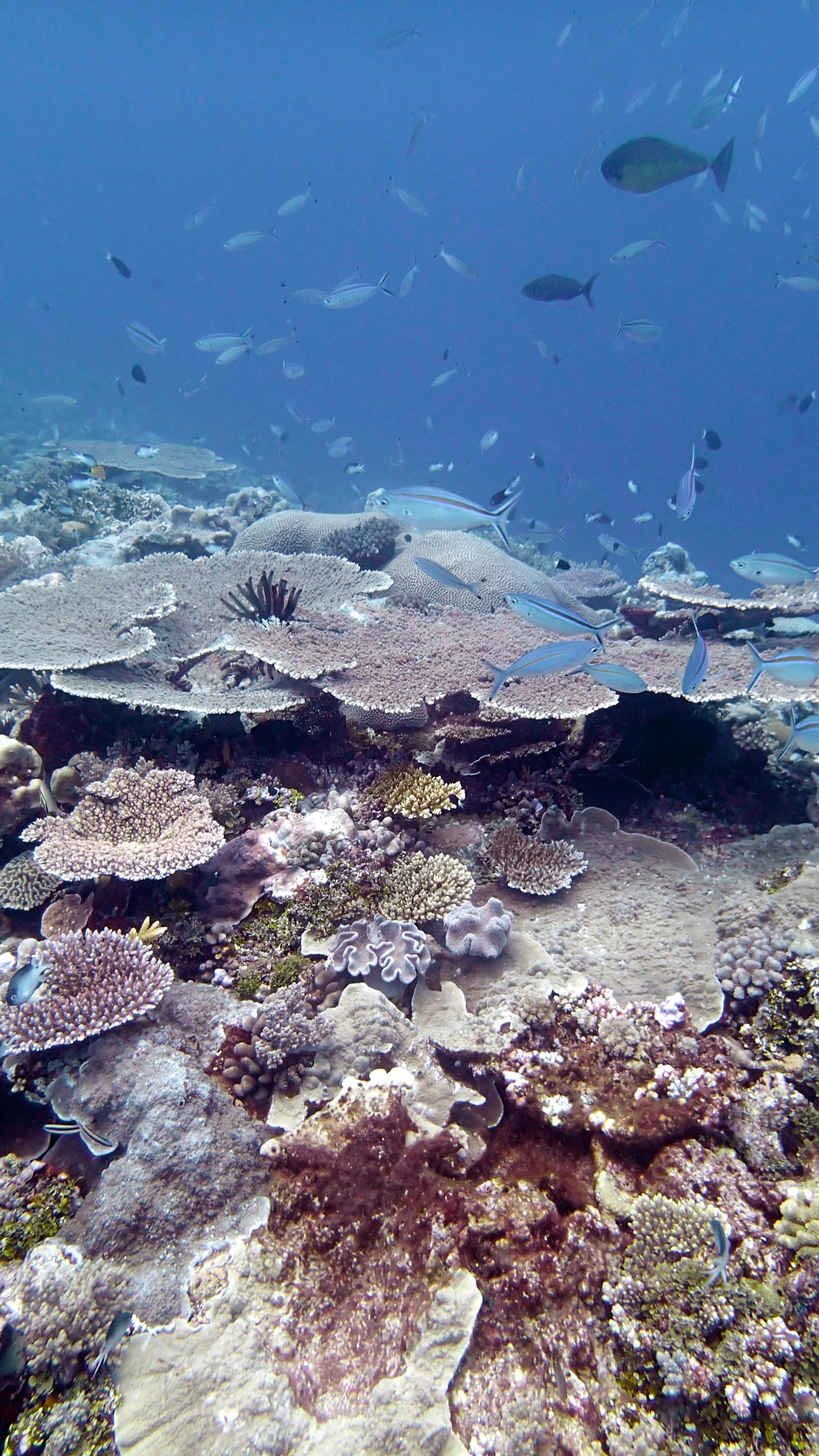 Wood Reef 9-21-14.jpg