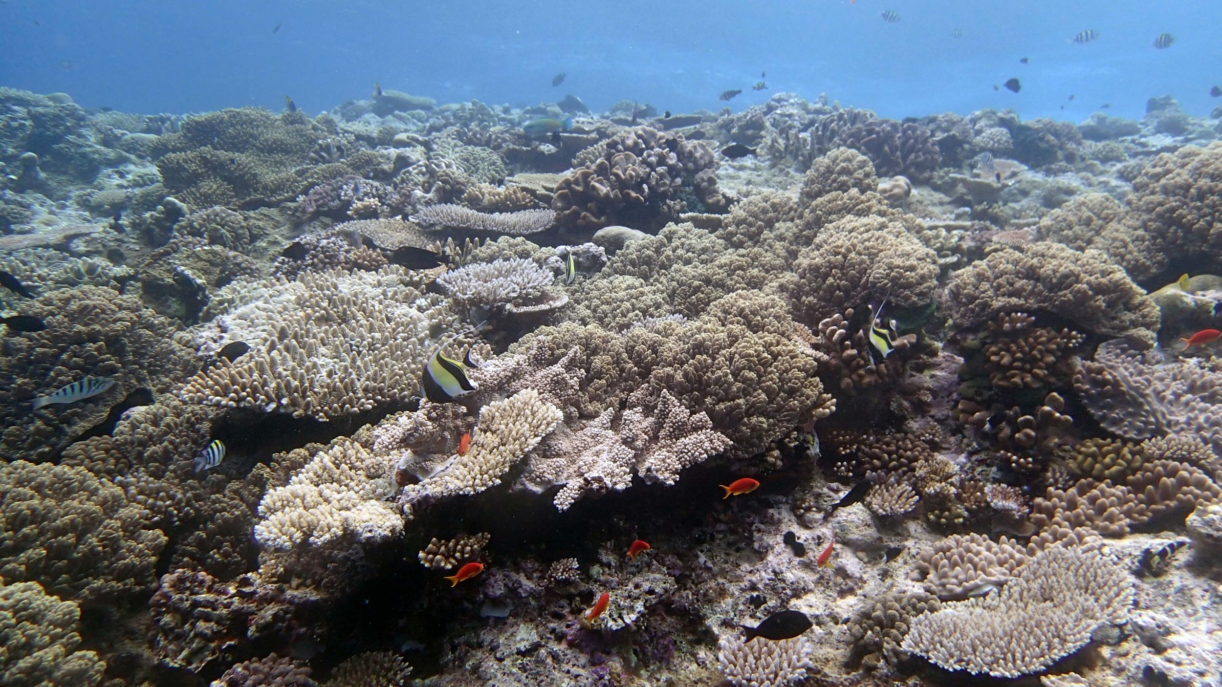 Wood Reef shallows.jpg