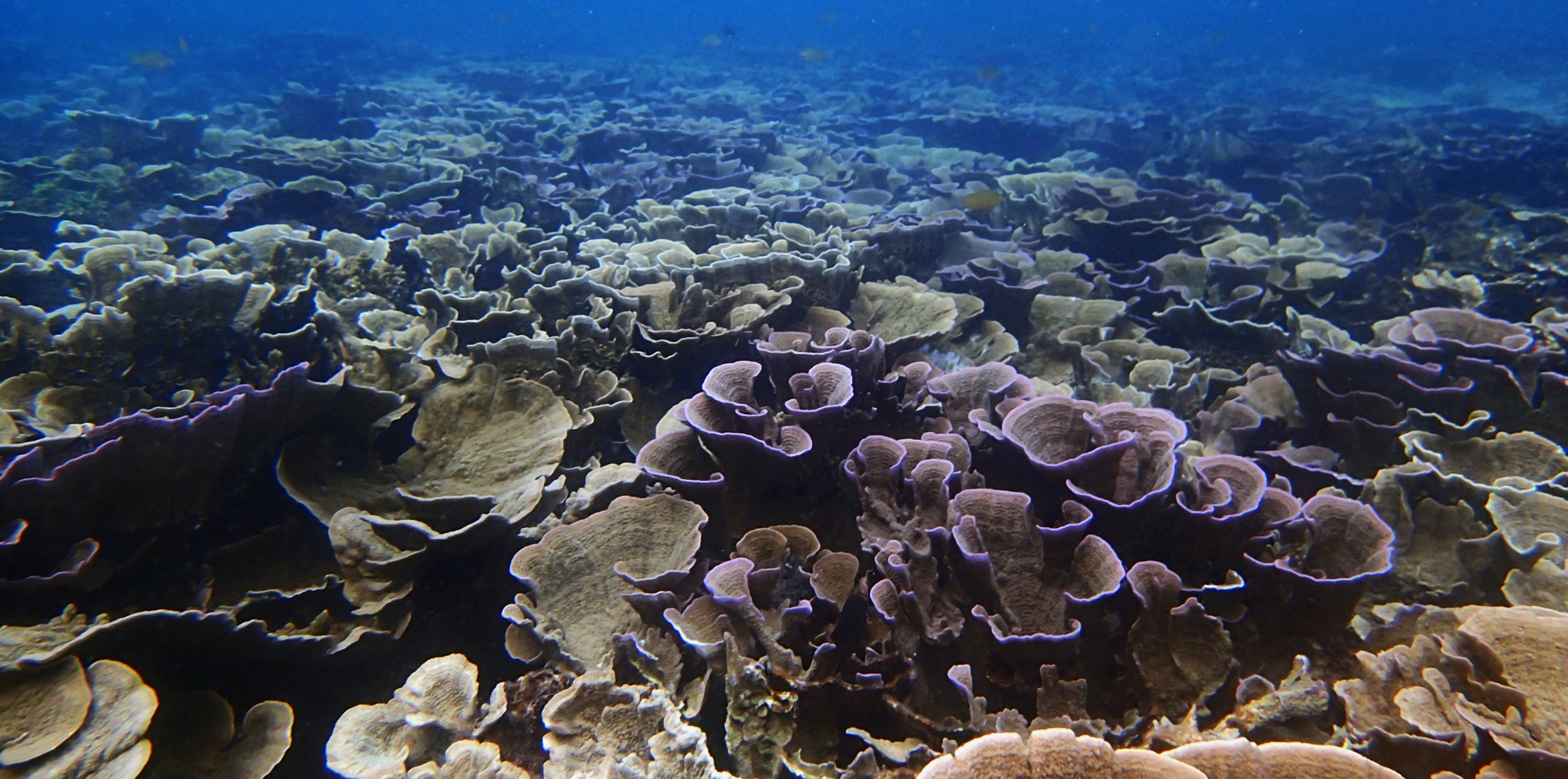 healthy Filipino reef.jpg