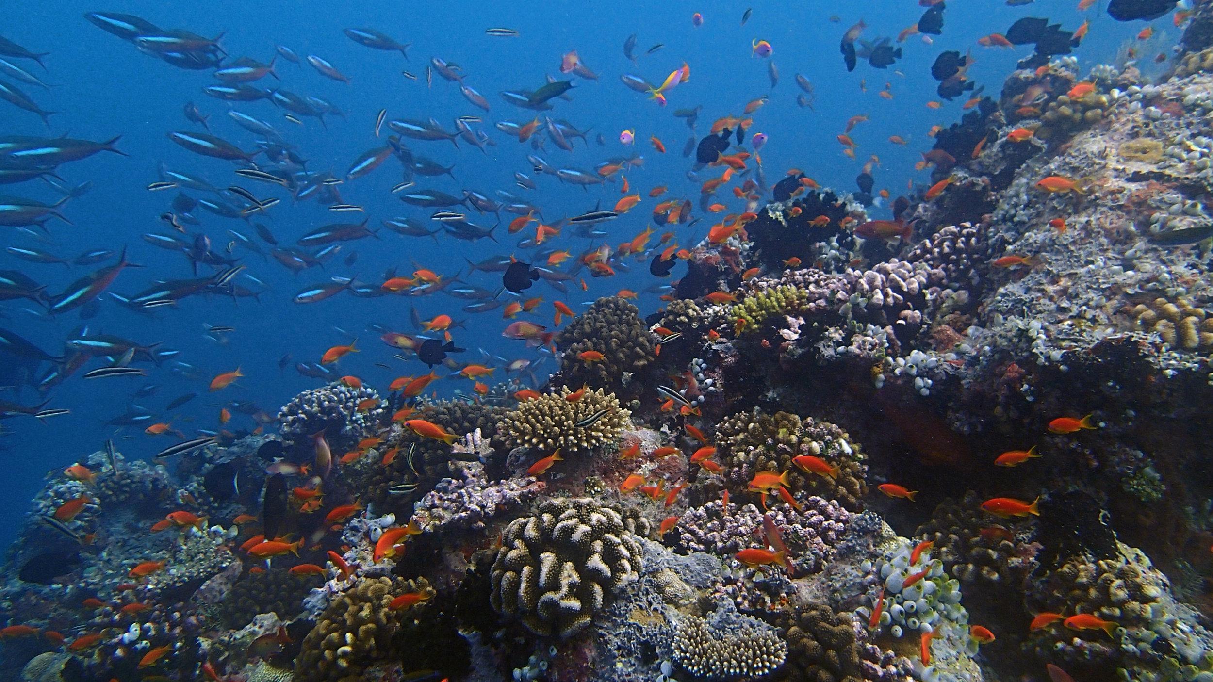 first dive at Ari.jpg