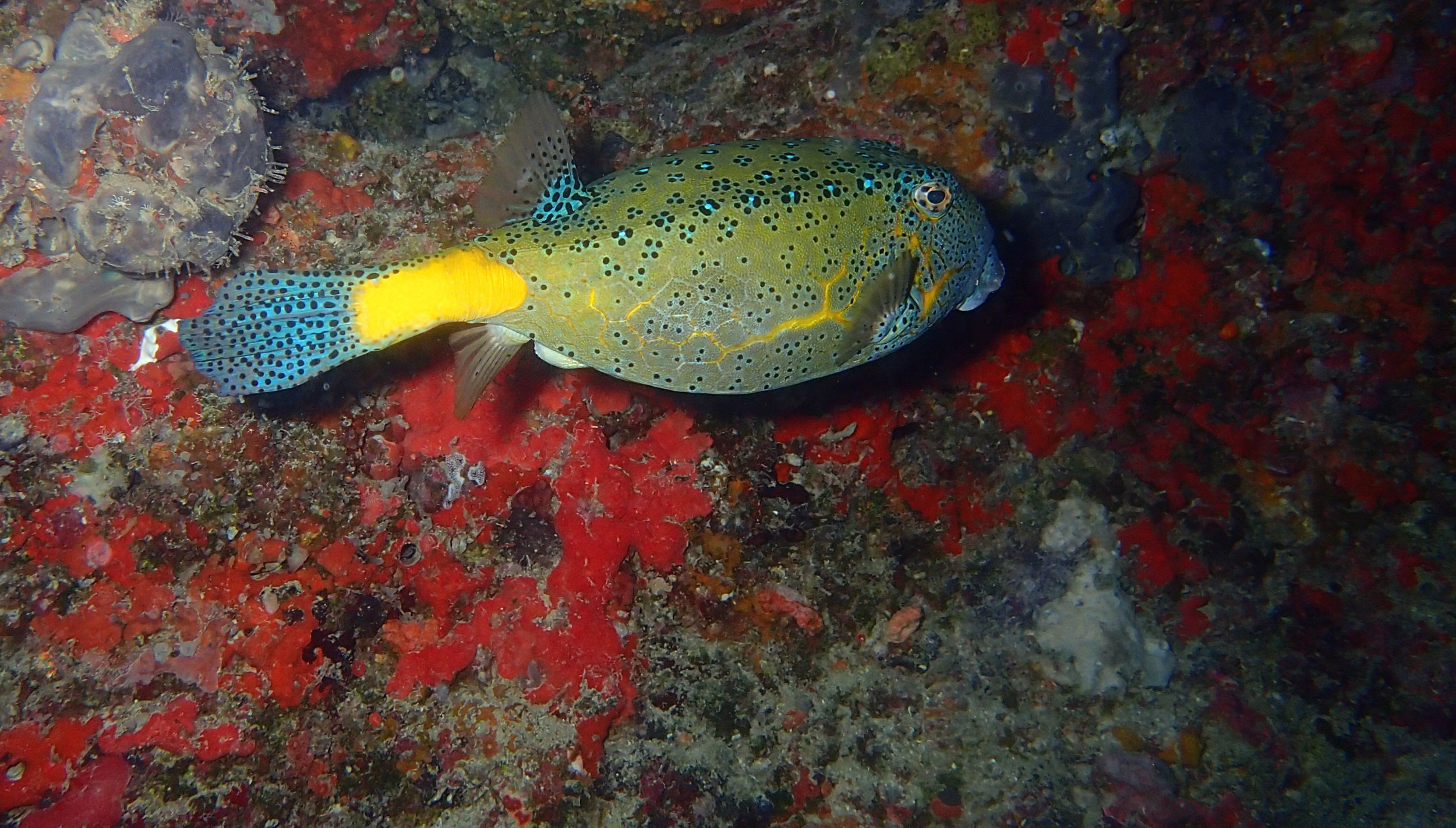 good boxfish shot.jpg