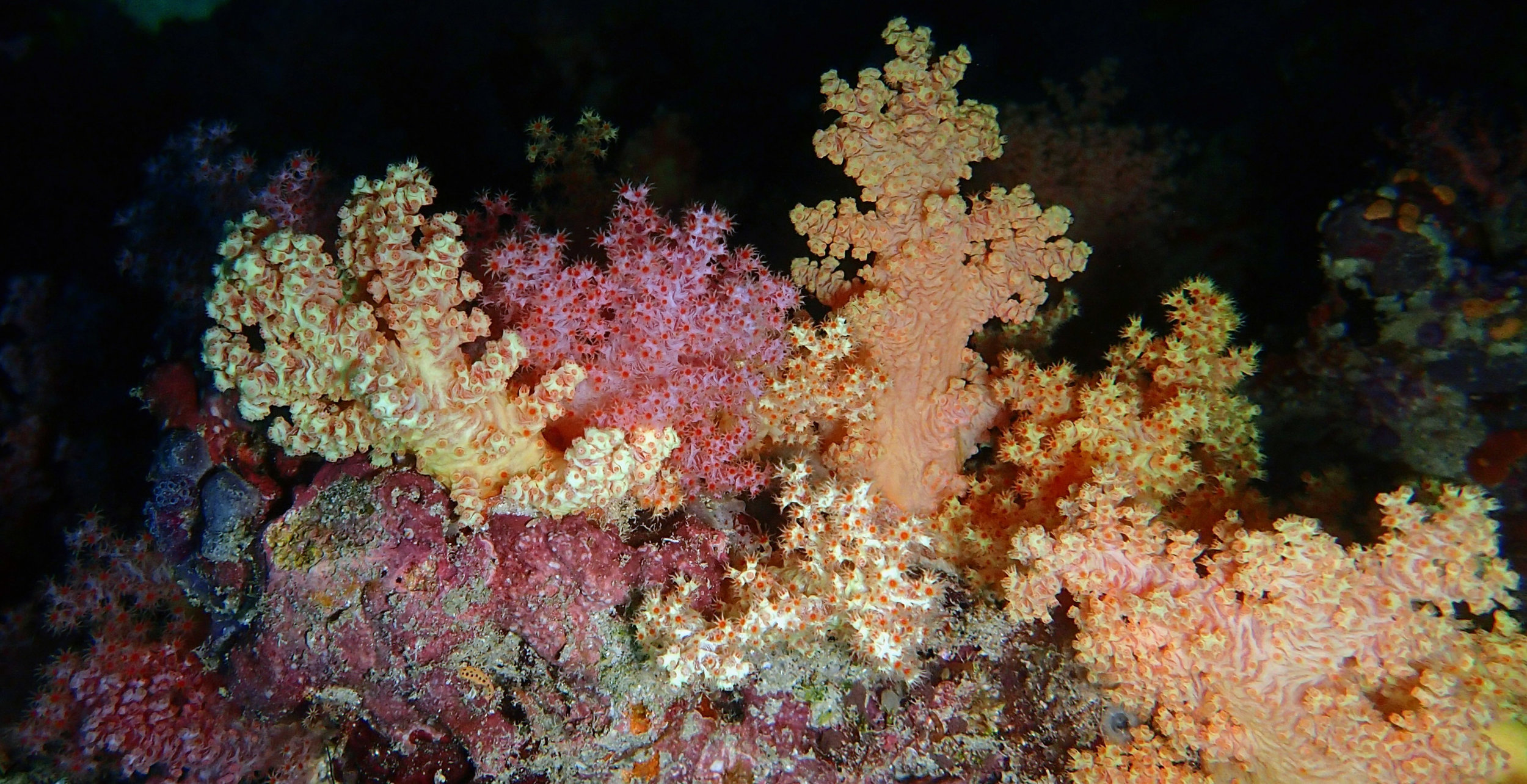 good soft coral shot.jpg