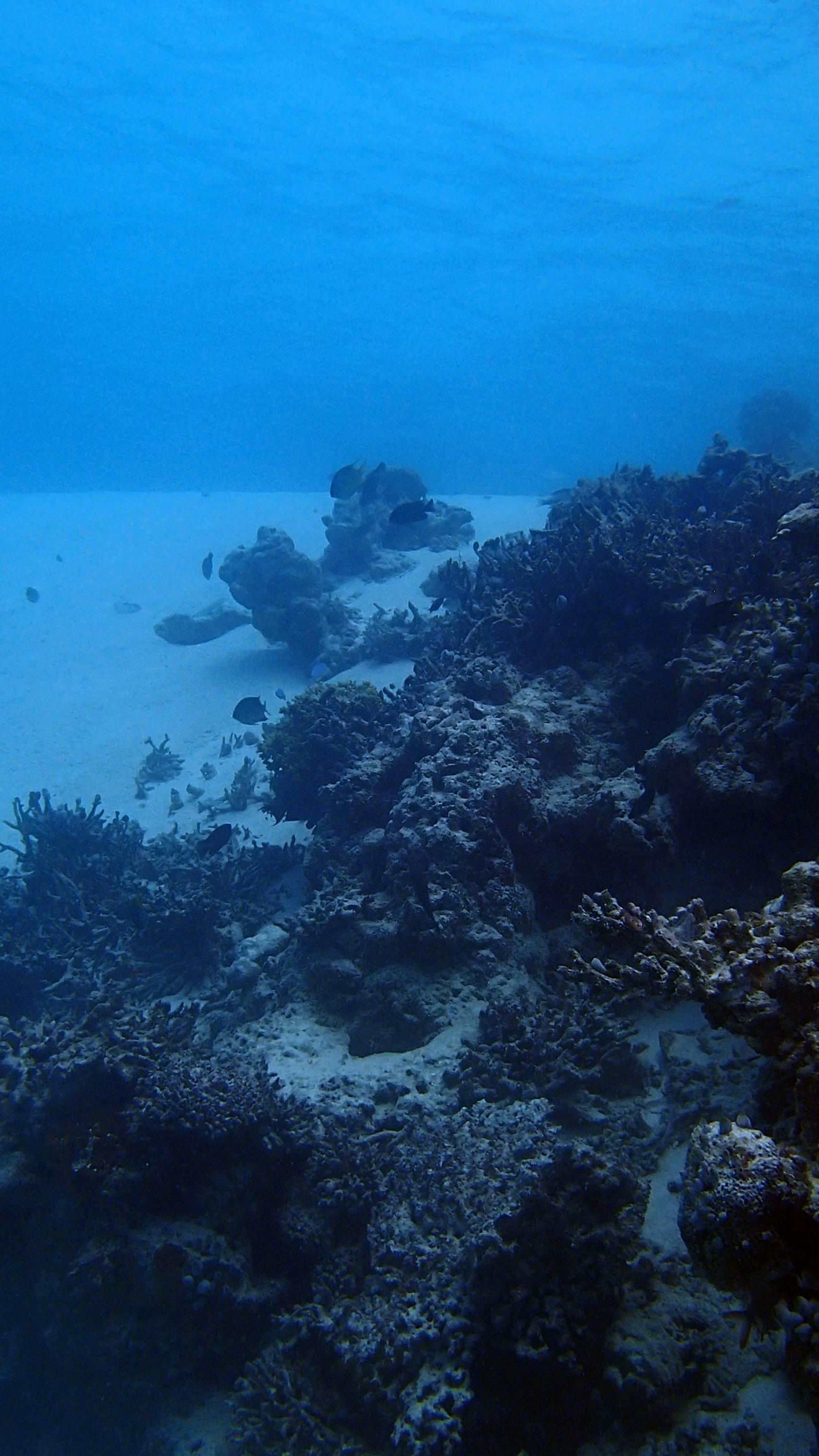 last dive of week 1.jpg