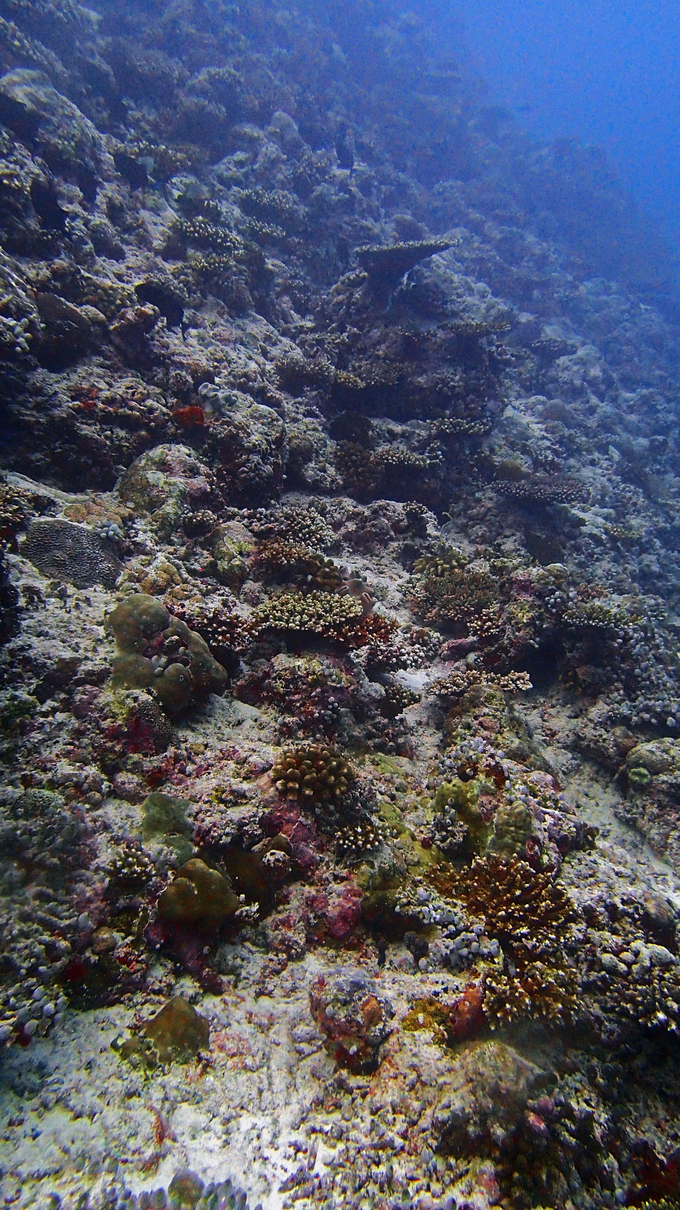 living reef.jpg