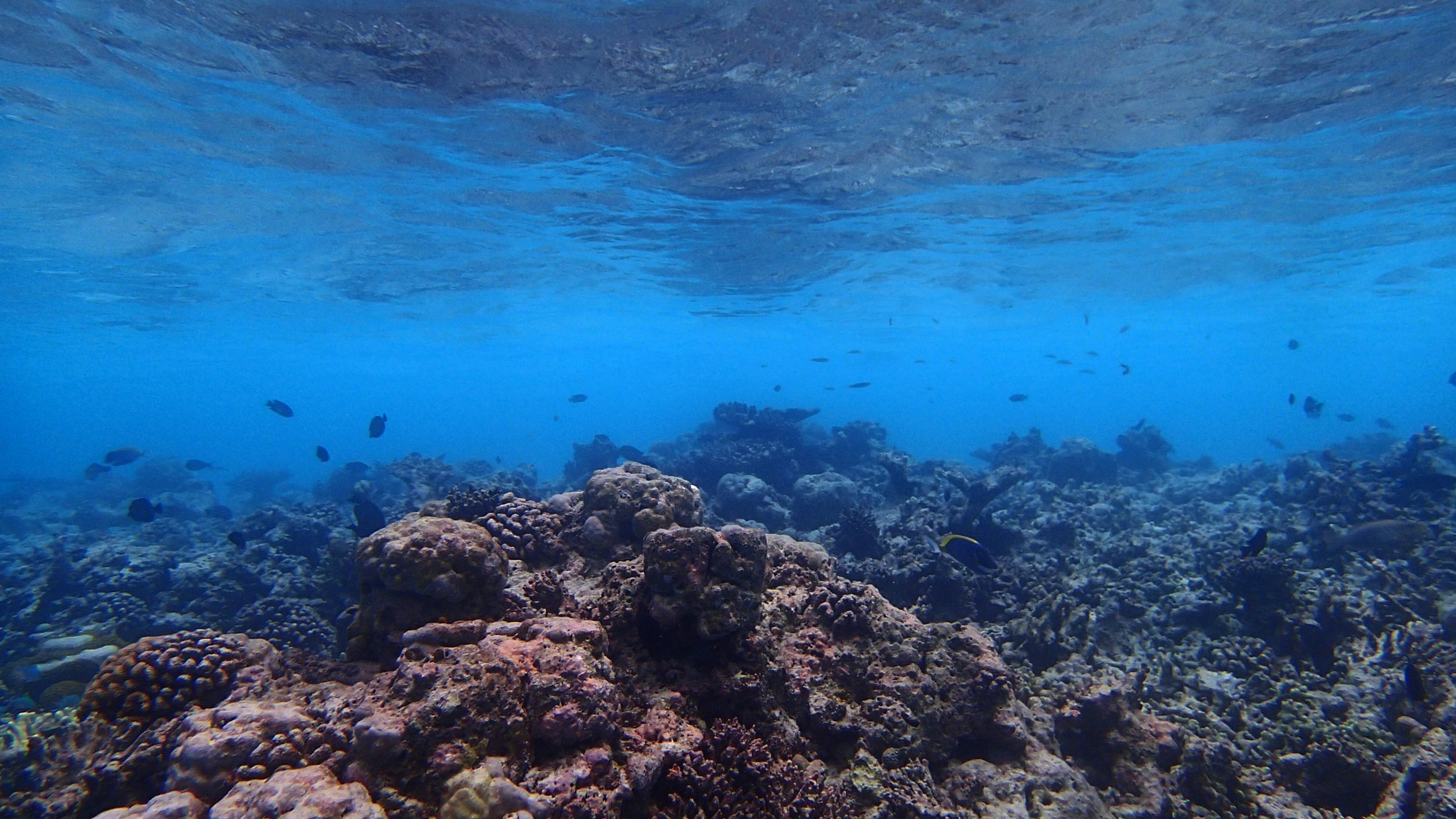 nice shot of the shallows.jpg