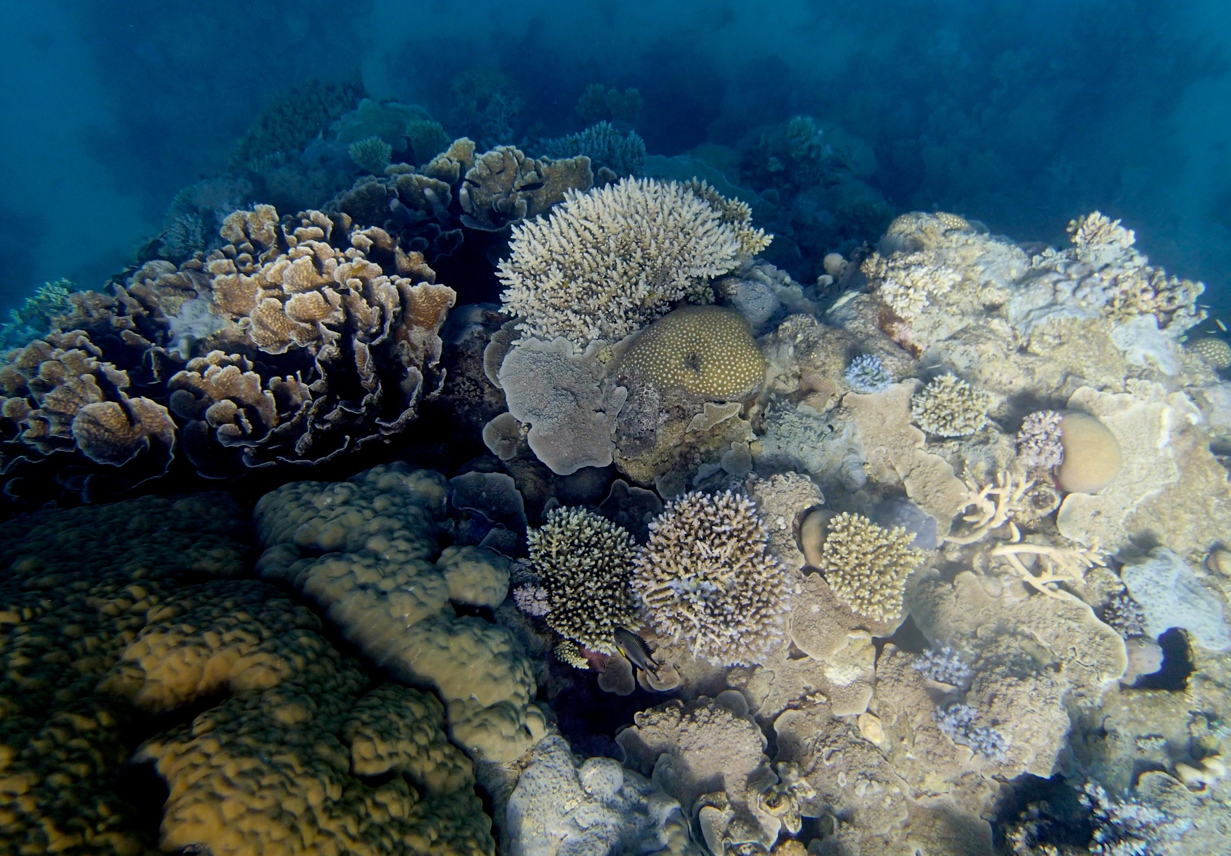 good shot of Unnamed Reef 63a.jpg