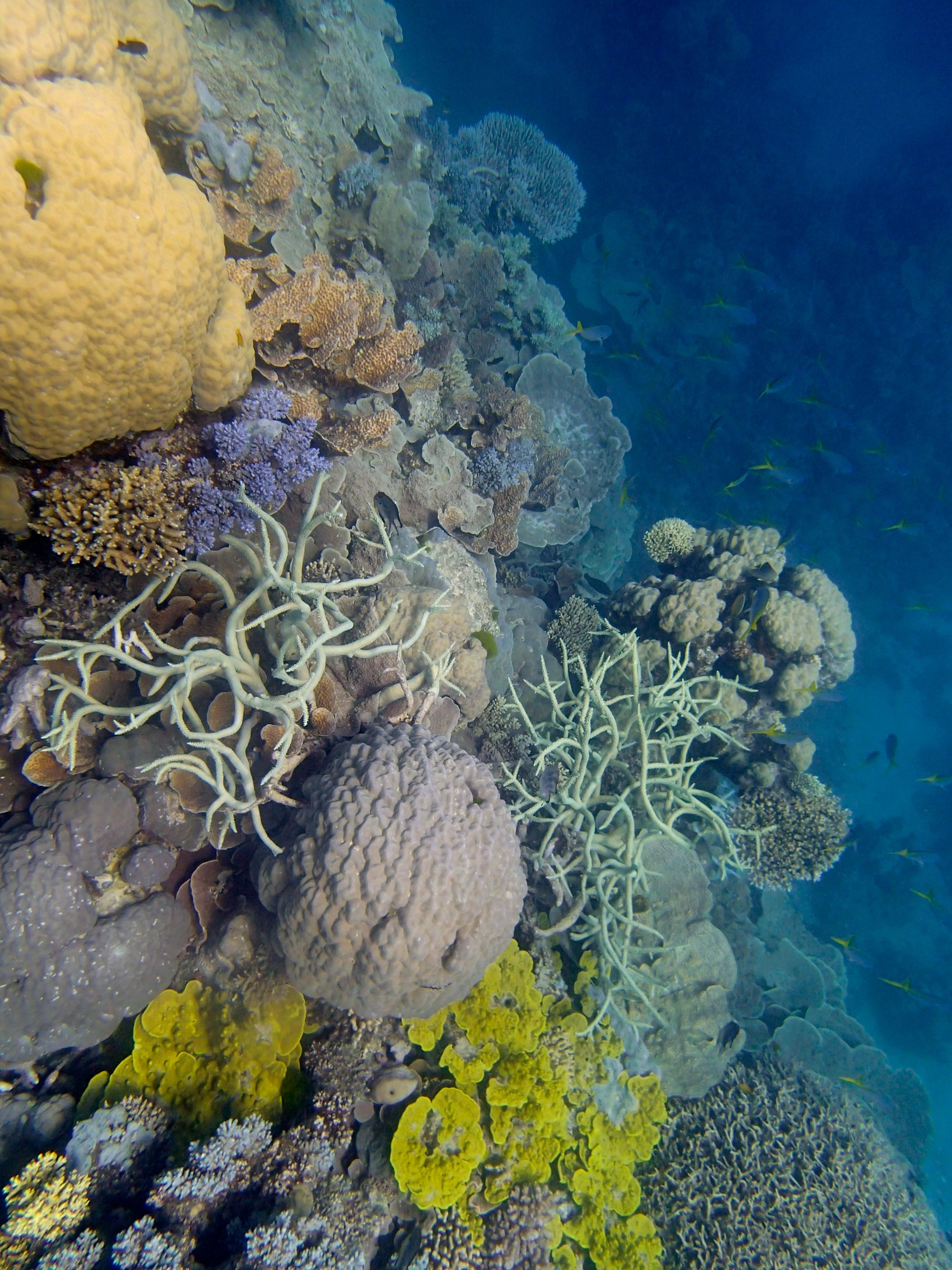 Unnamed Reef 63a.jpg
