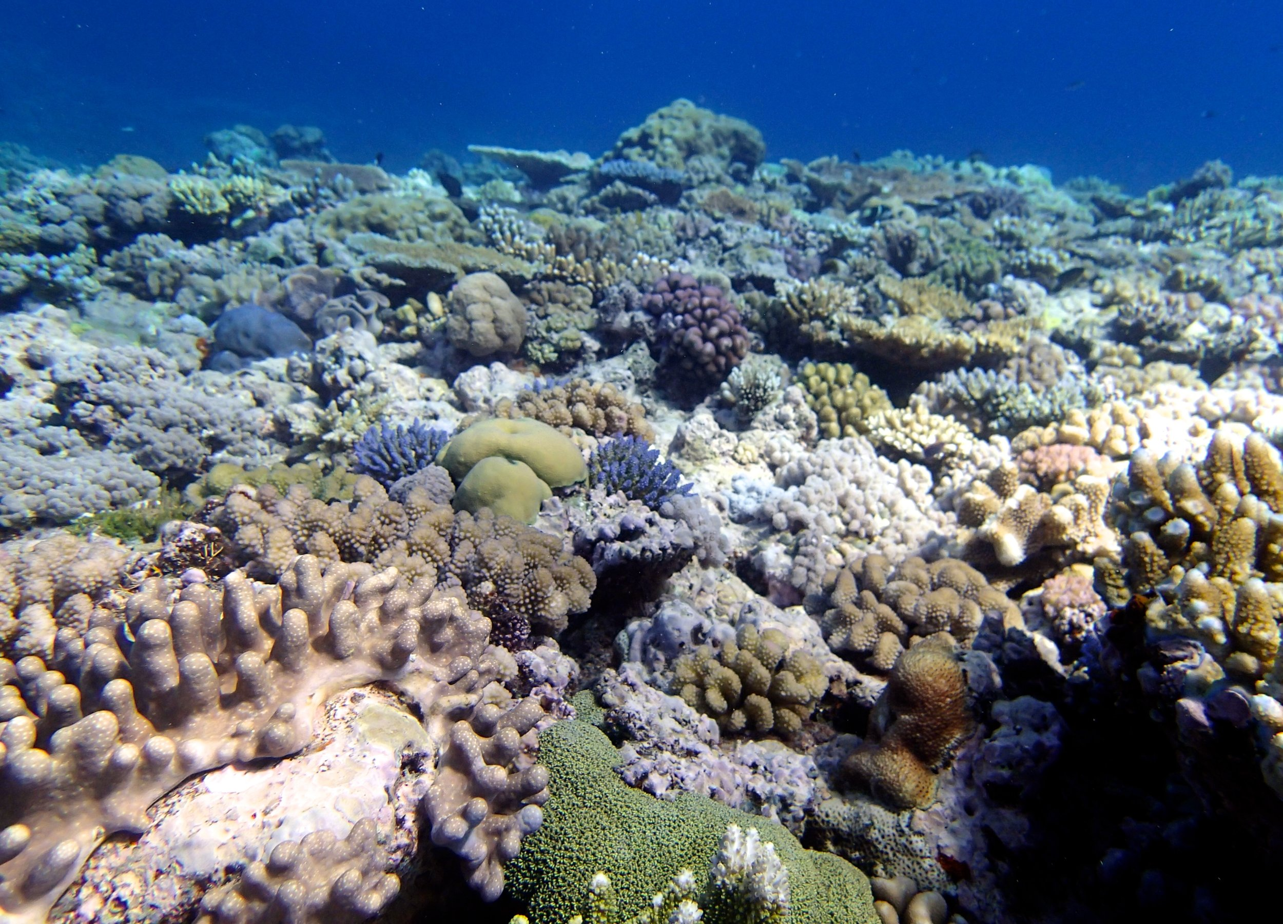 beautiful Jewel Reef.jpg