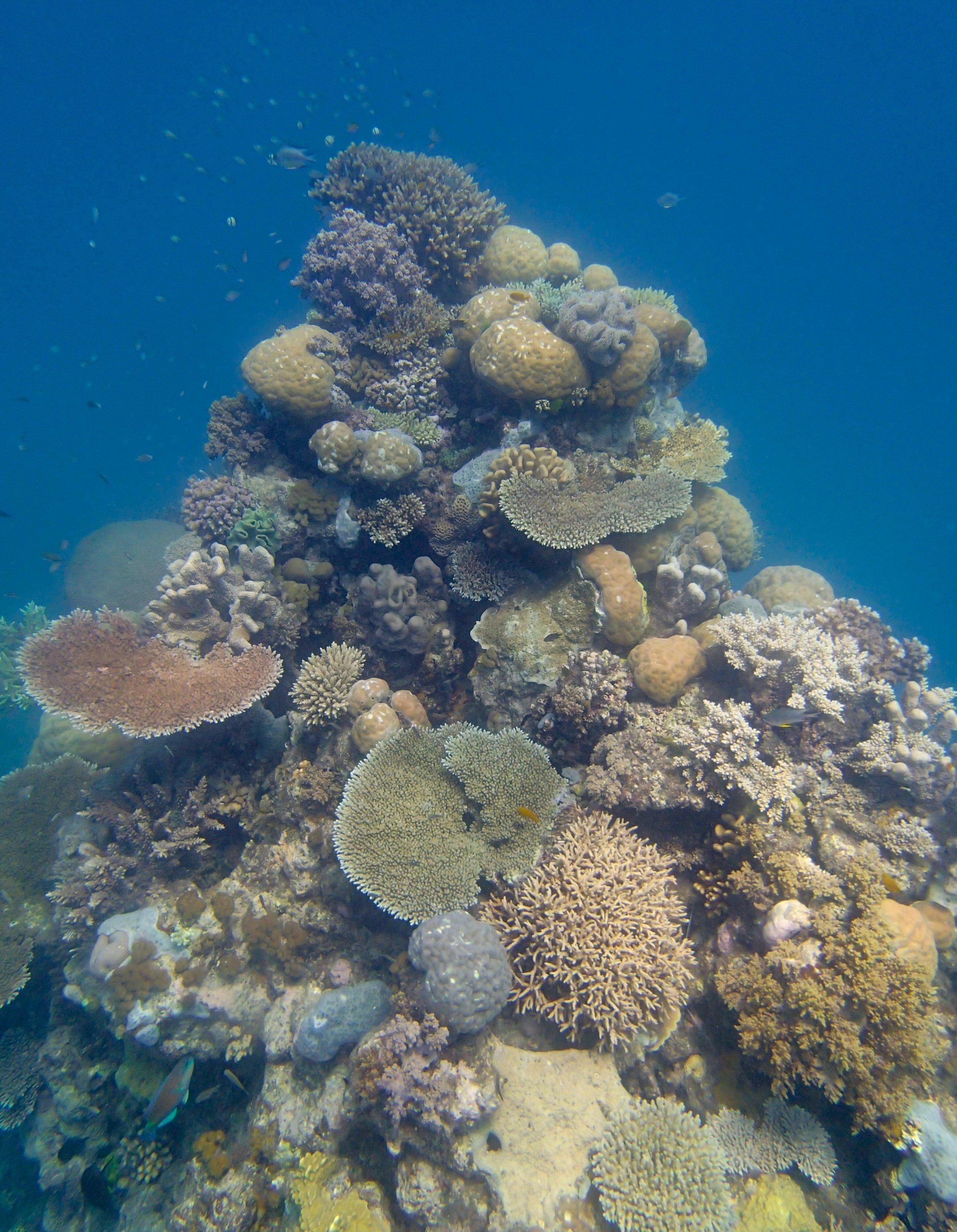 coral spire.jpg