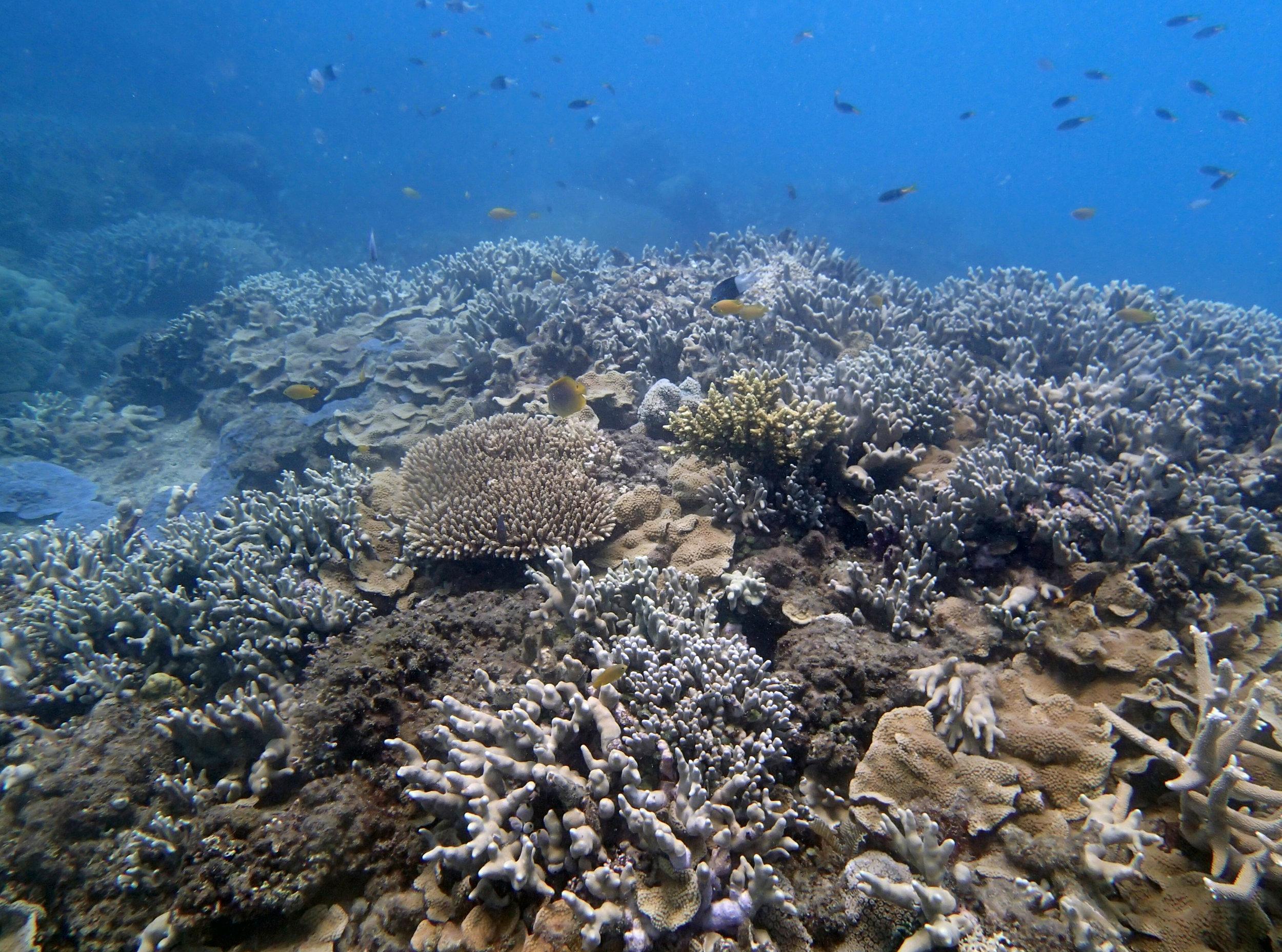 good shot of Unnamed Reef 39.jpg