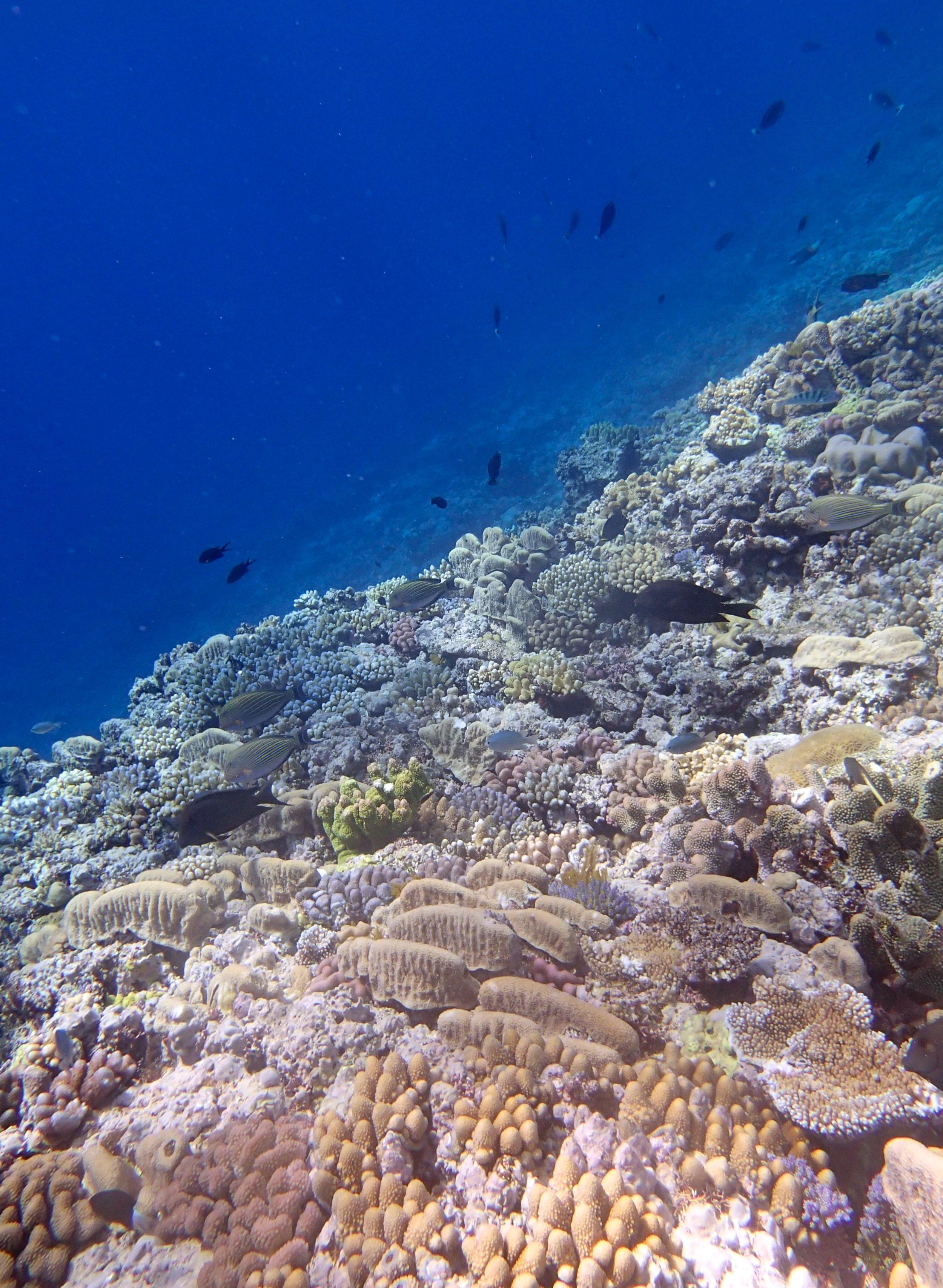 Hicks Reef.jpg
