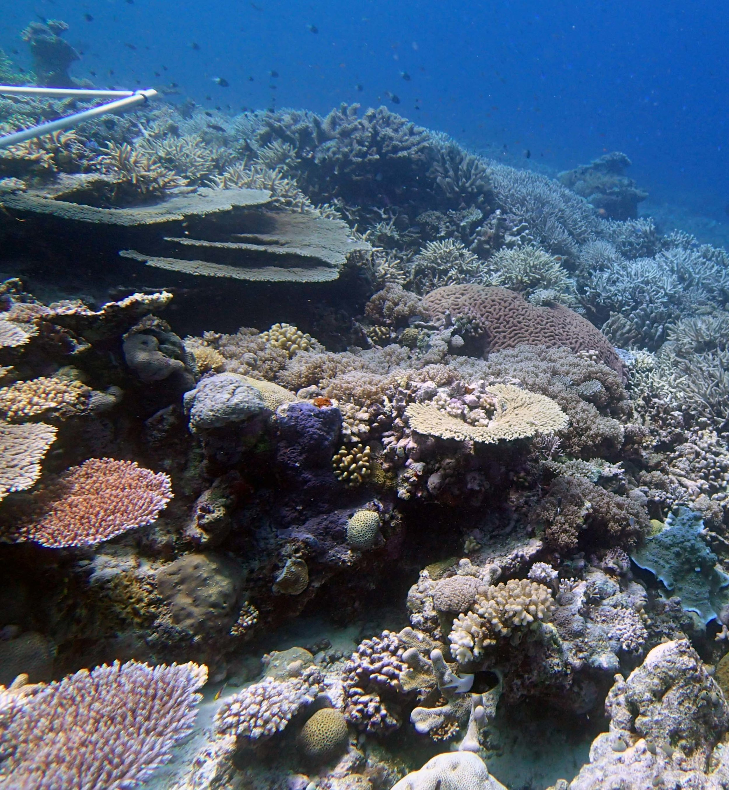 high coral cover 9-28-14.jpg