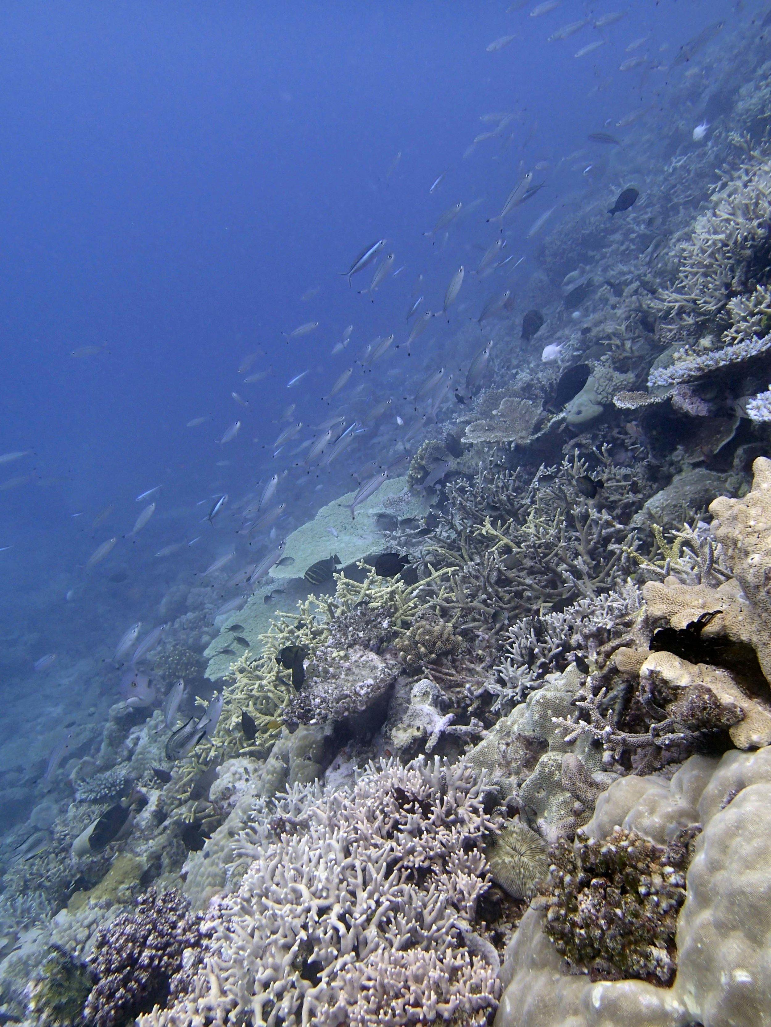 Reef 11-096.jpg