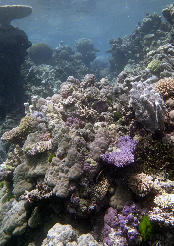 Yule Detached Reef 9-22-14.jpg
