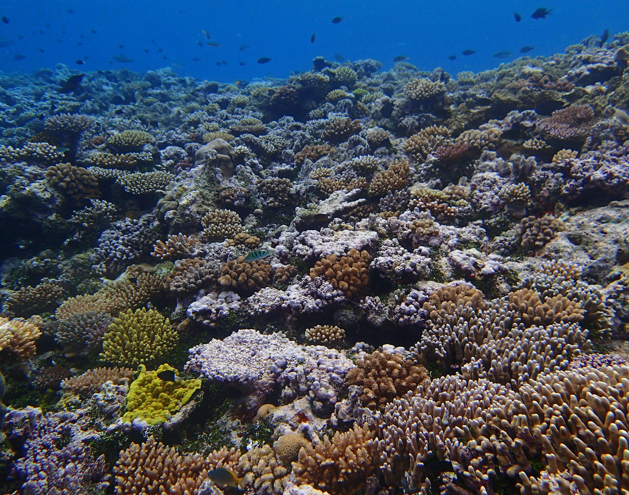 Reef Islands day 3.jpg