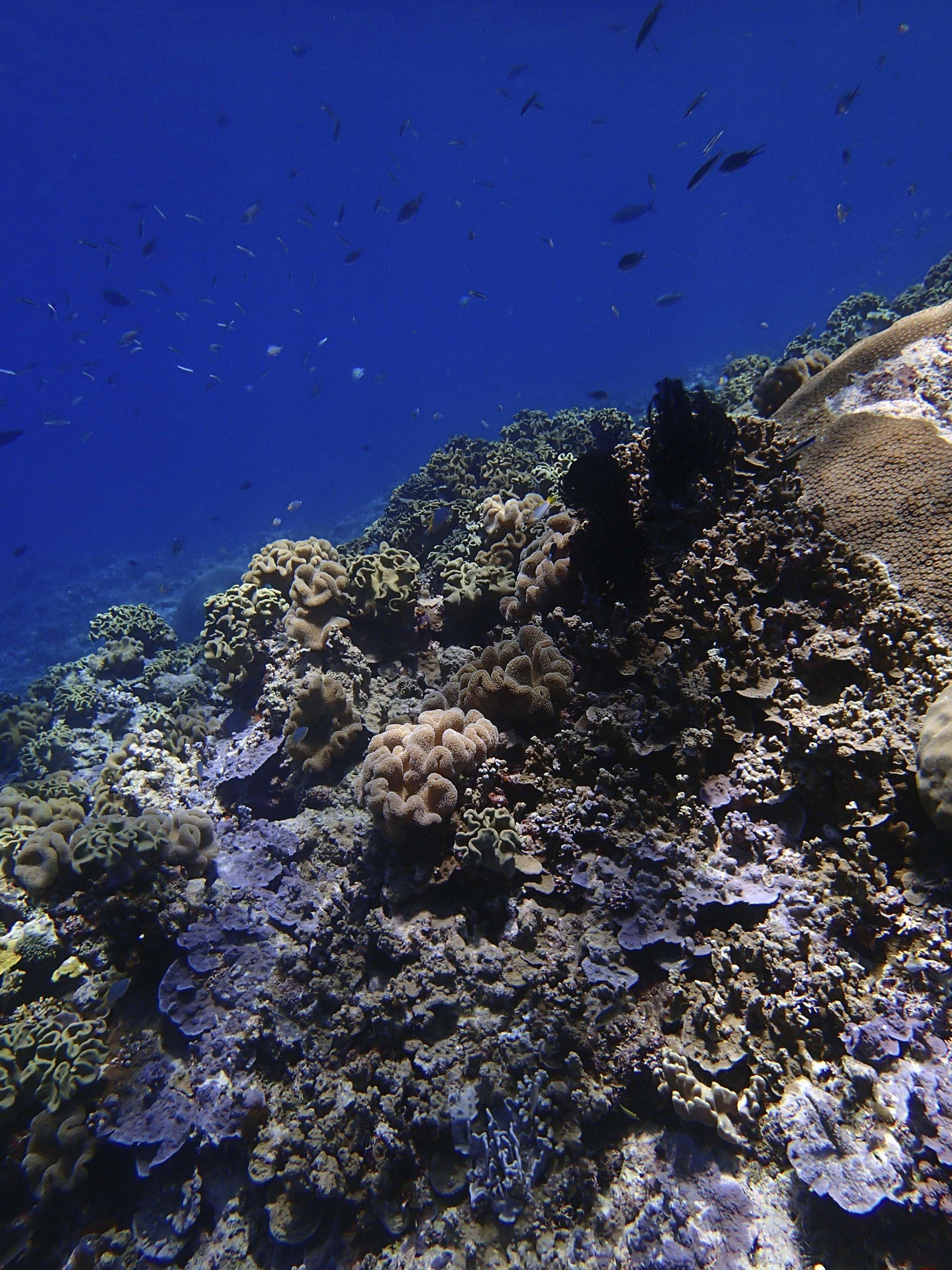 shallows of SoRi53.jpg