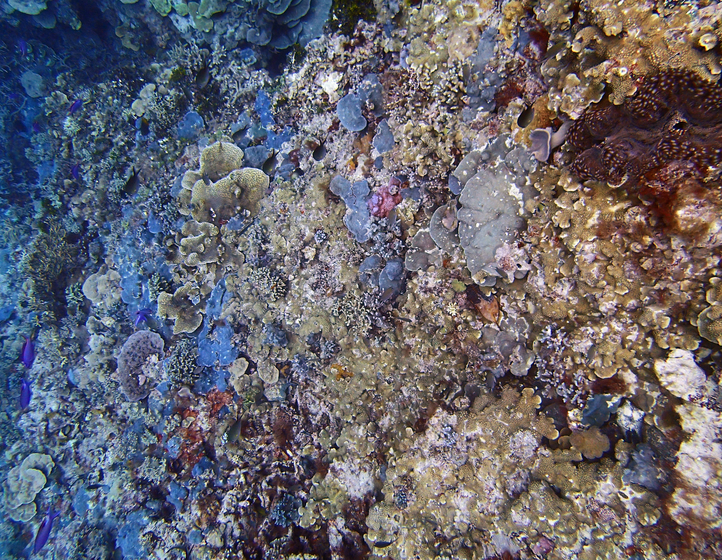 Reef Islands day 1 11-17-14.jpg