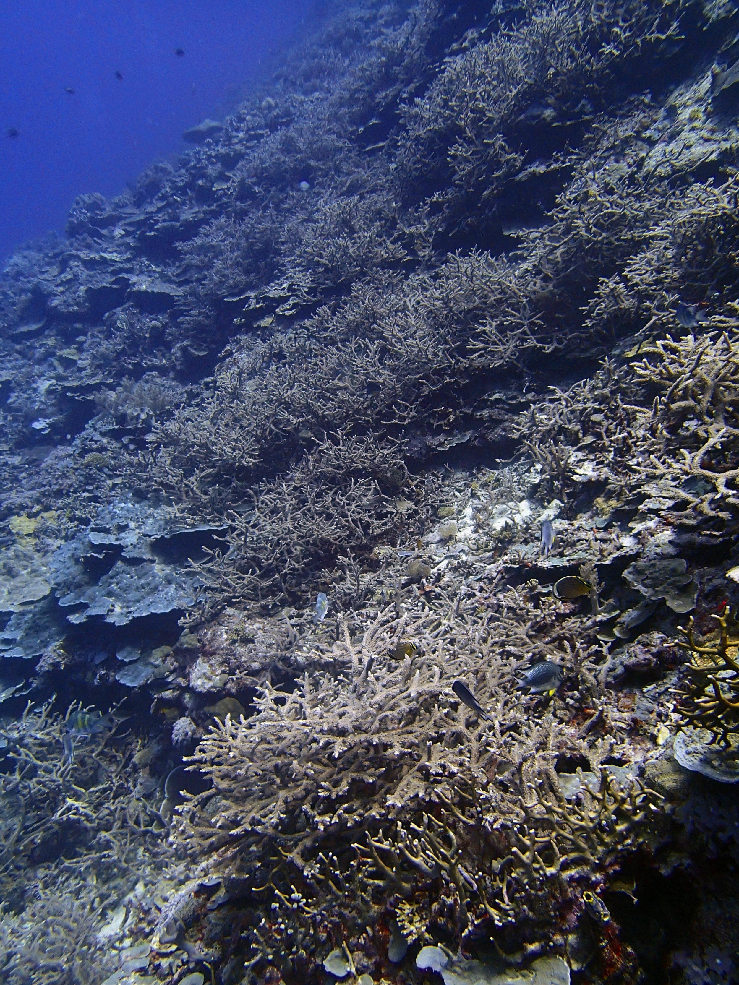 Reef Islands day 1.jpg