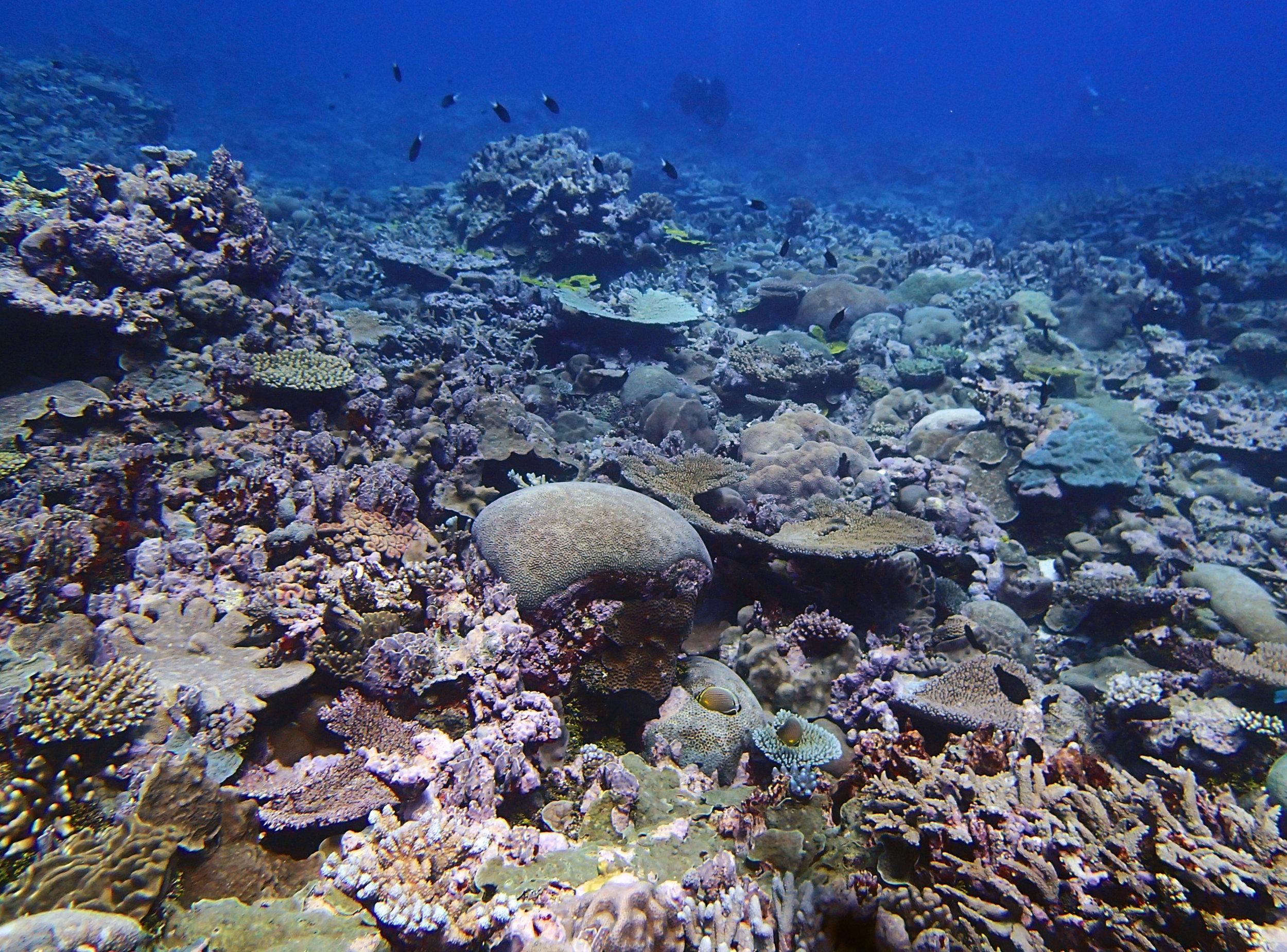 great dive 11-12-14.jpg