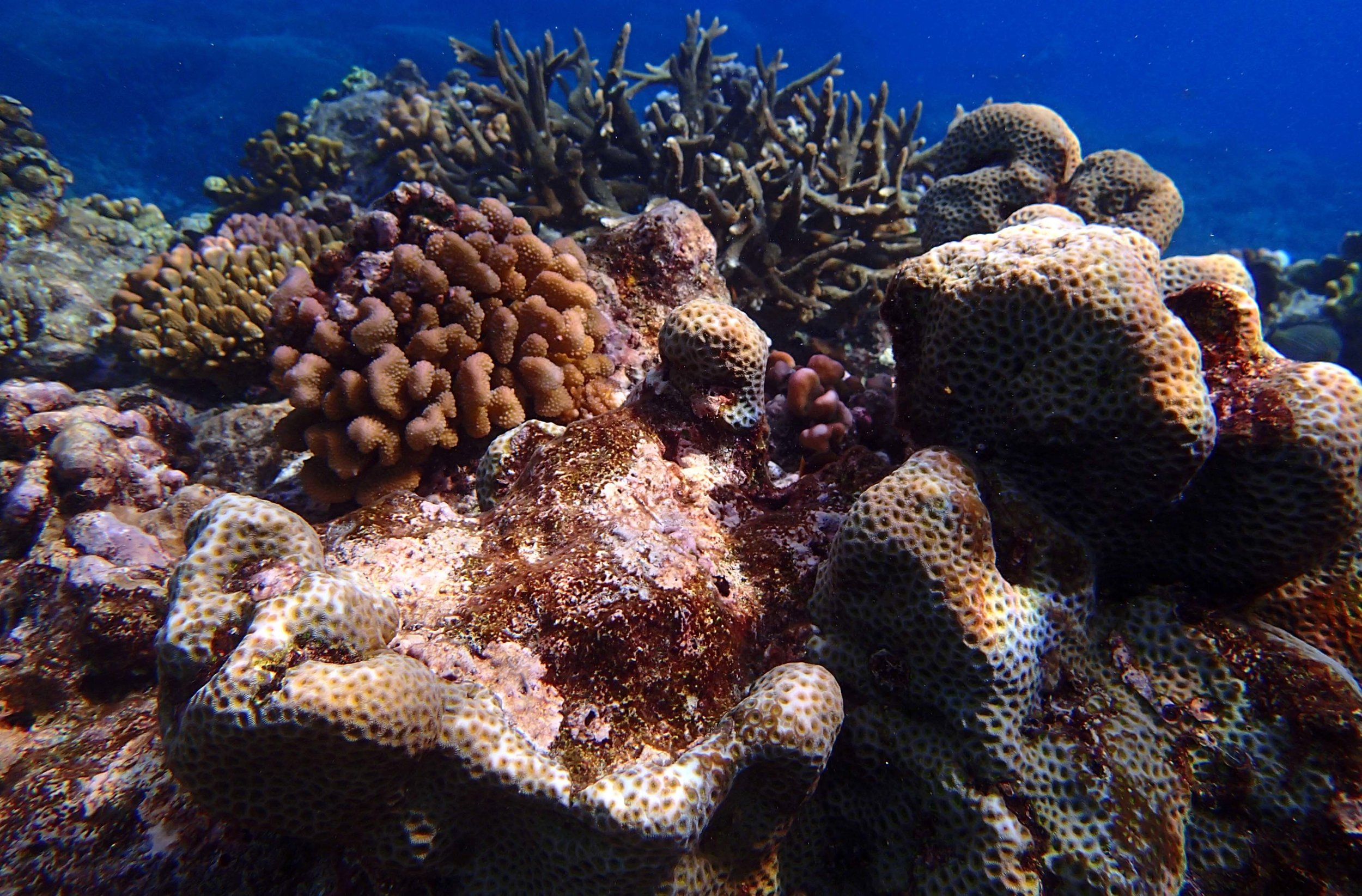 Sikopo Island Solomon Islands.jpg