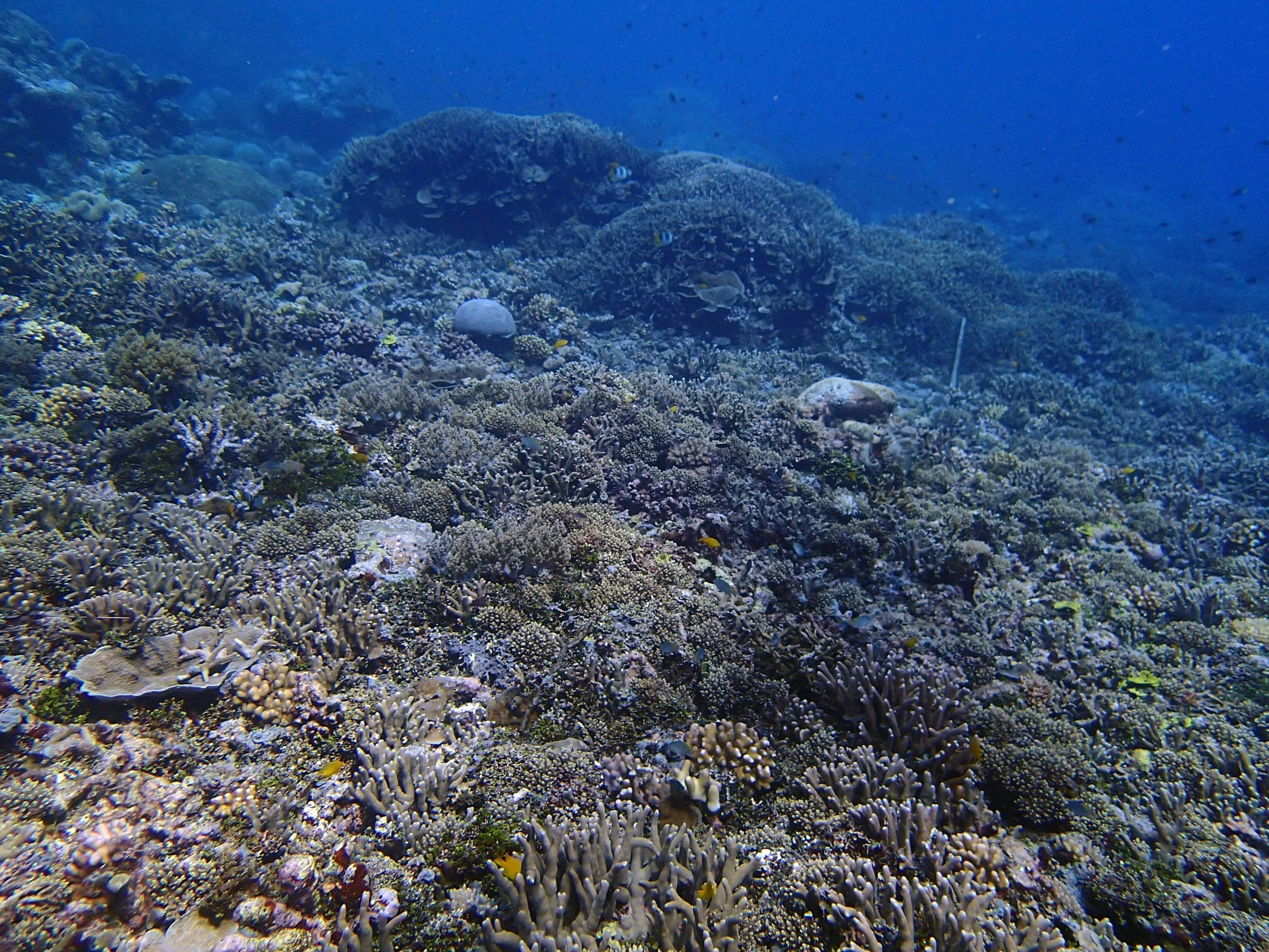 2014-11-2 Sikopo Island.jpg