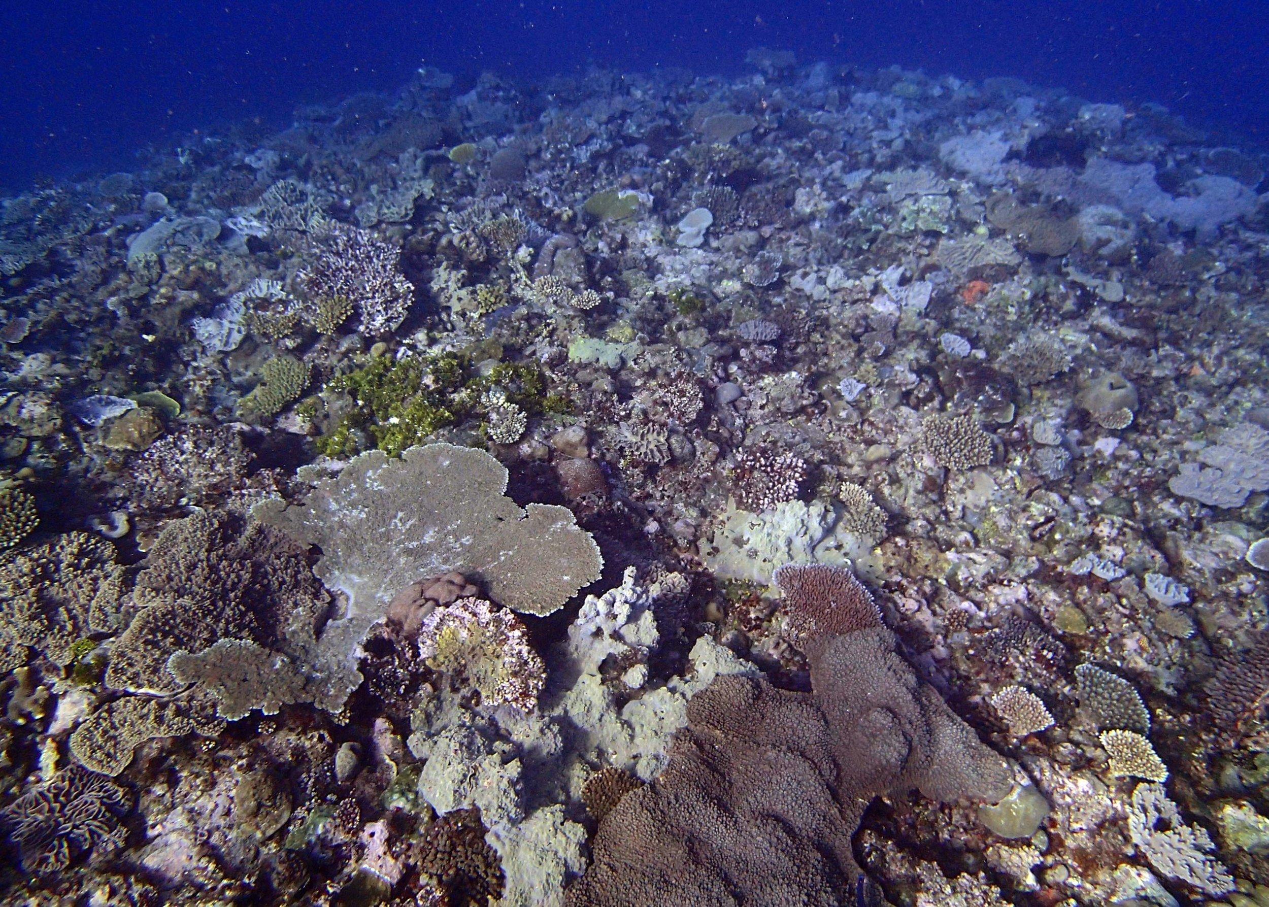 corals of Gizo.jpg