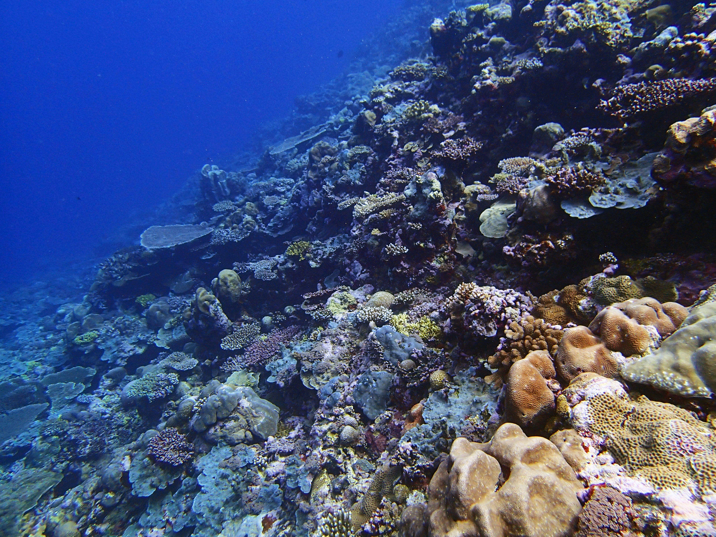 1st dive of 1-14-15.jpg