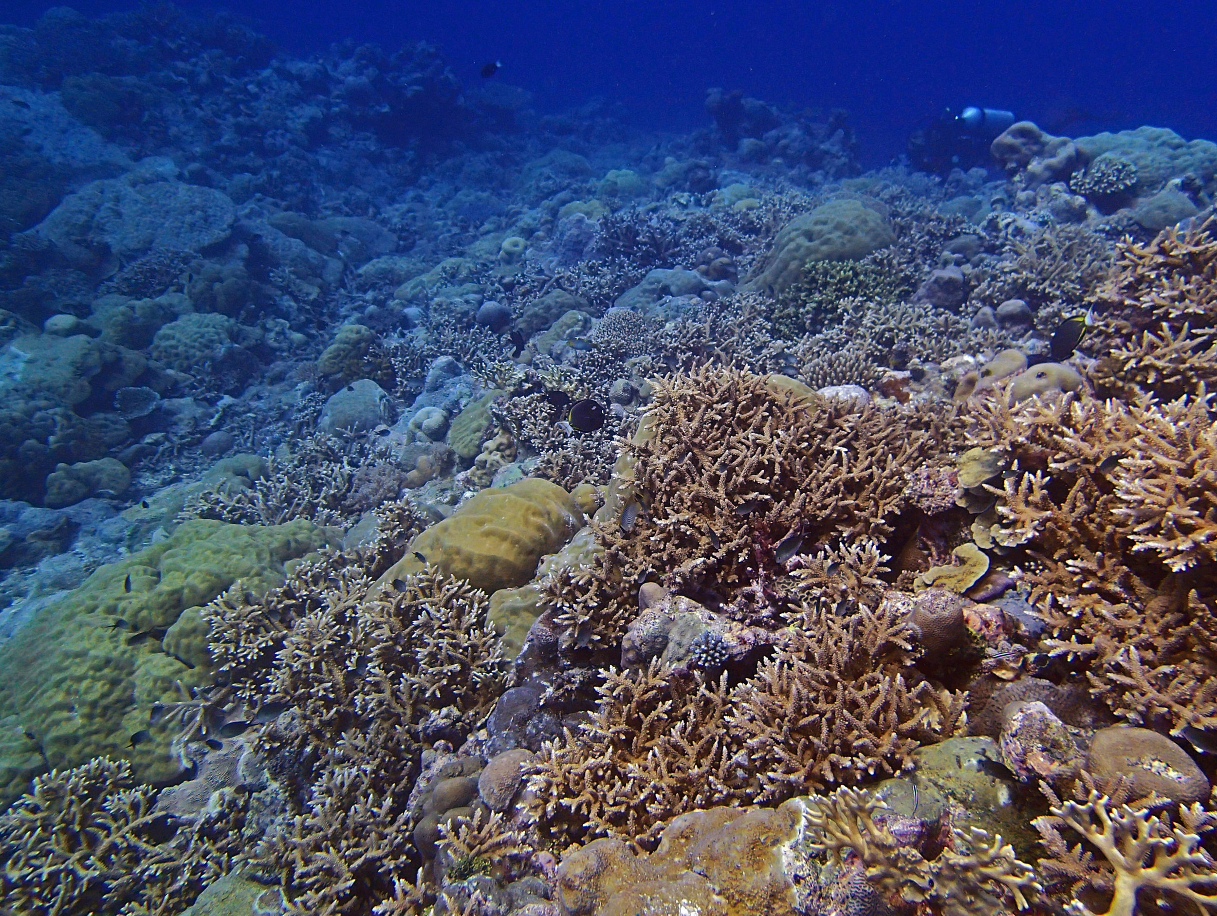 beautiful Velasco reef.jpg