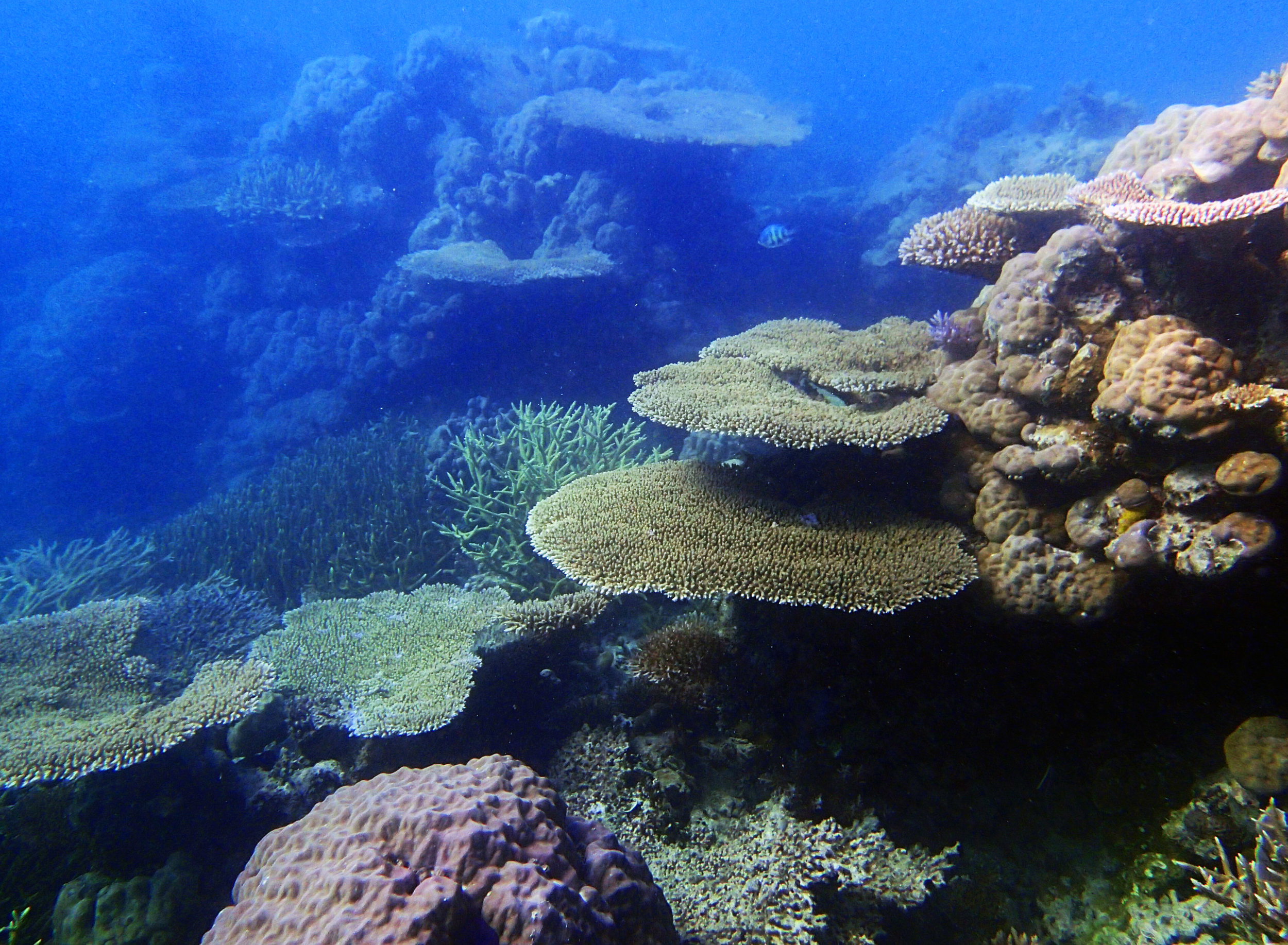 lagoonal patch reef 1-26-15.jpg