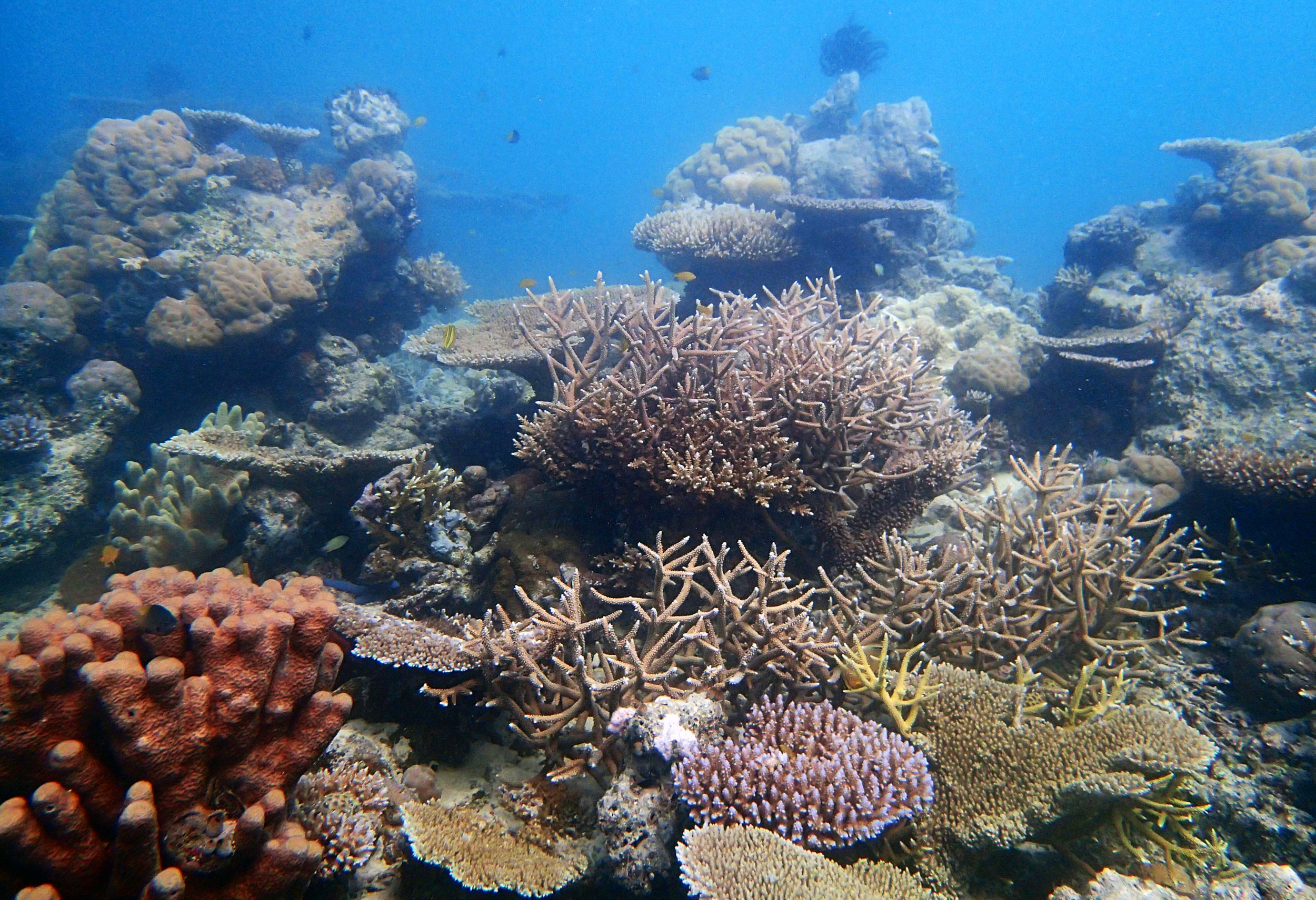 lagoonal patch reef.jpg