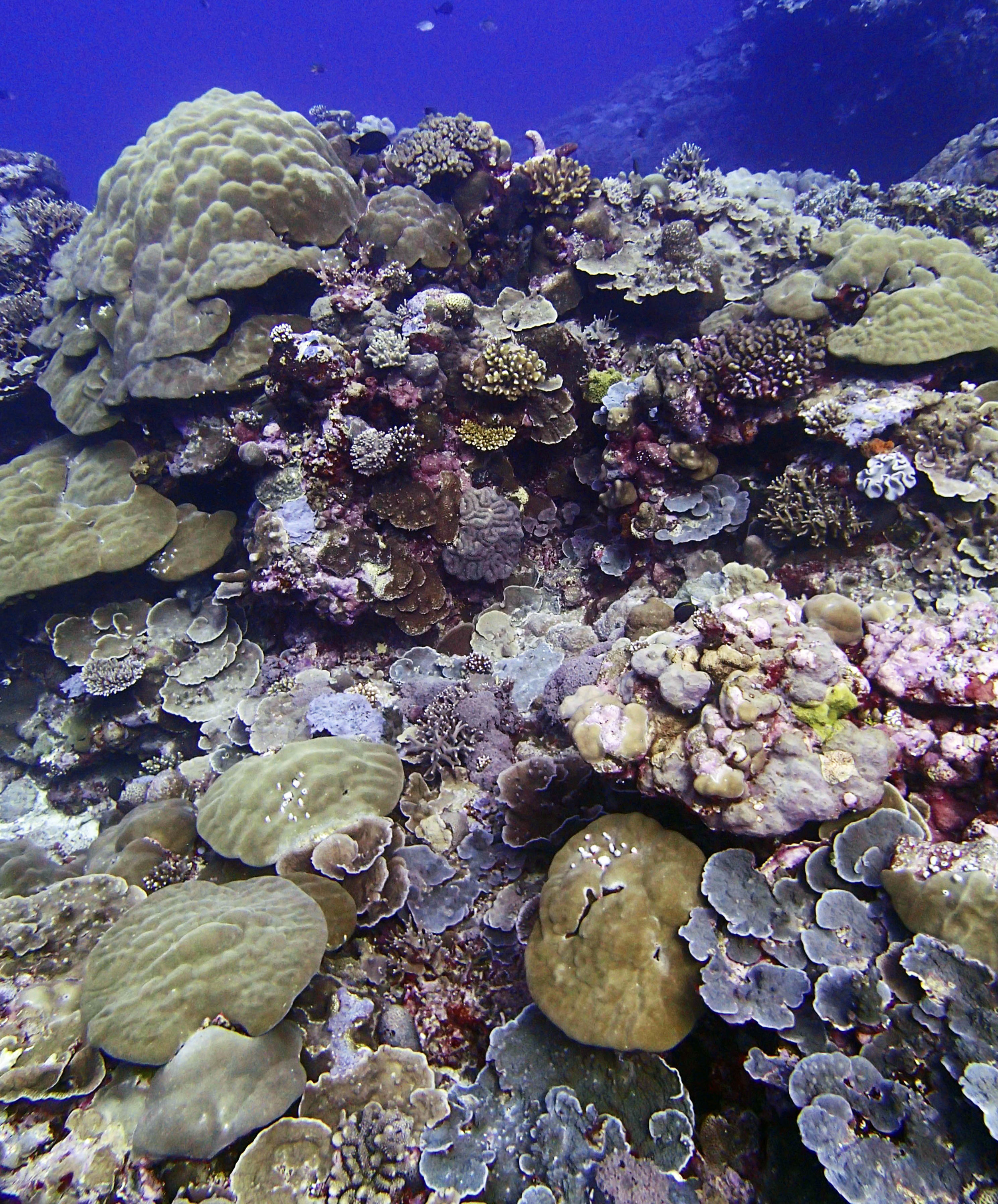 second dive of 1-16-15.jpg