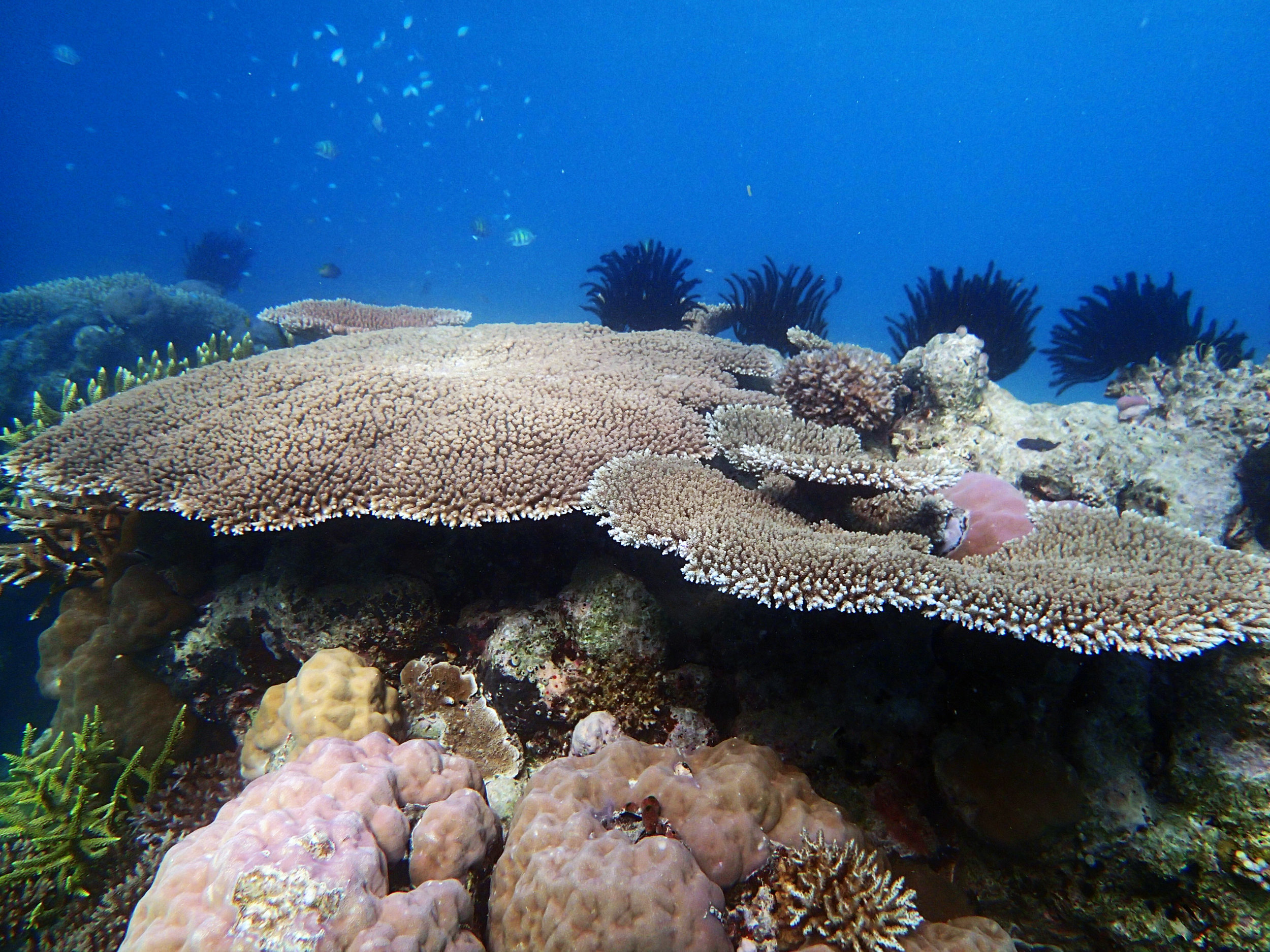 shallows Pa50.jpg