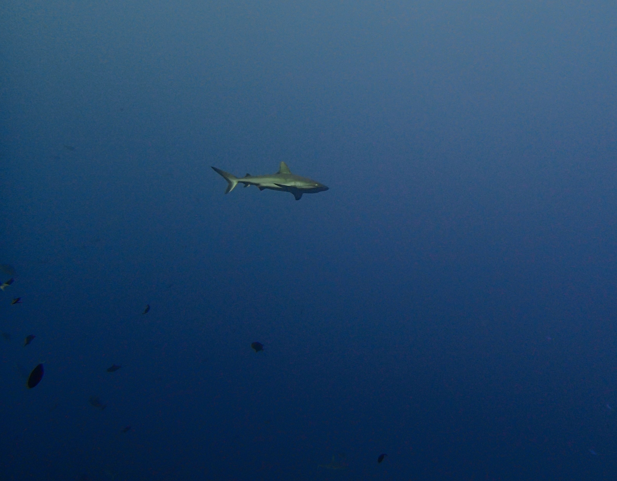 shark at blue corner.jpg