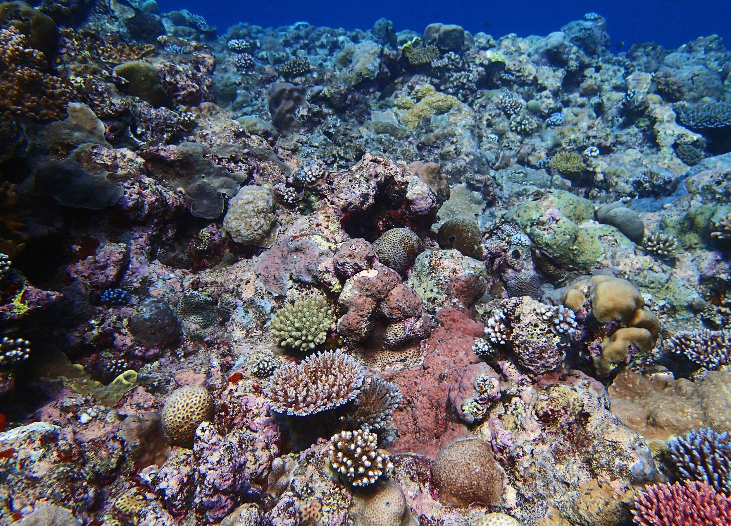 Velasco Reef.jpg