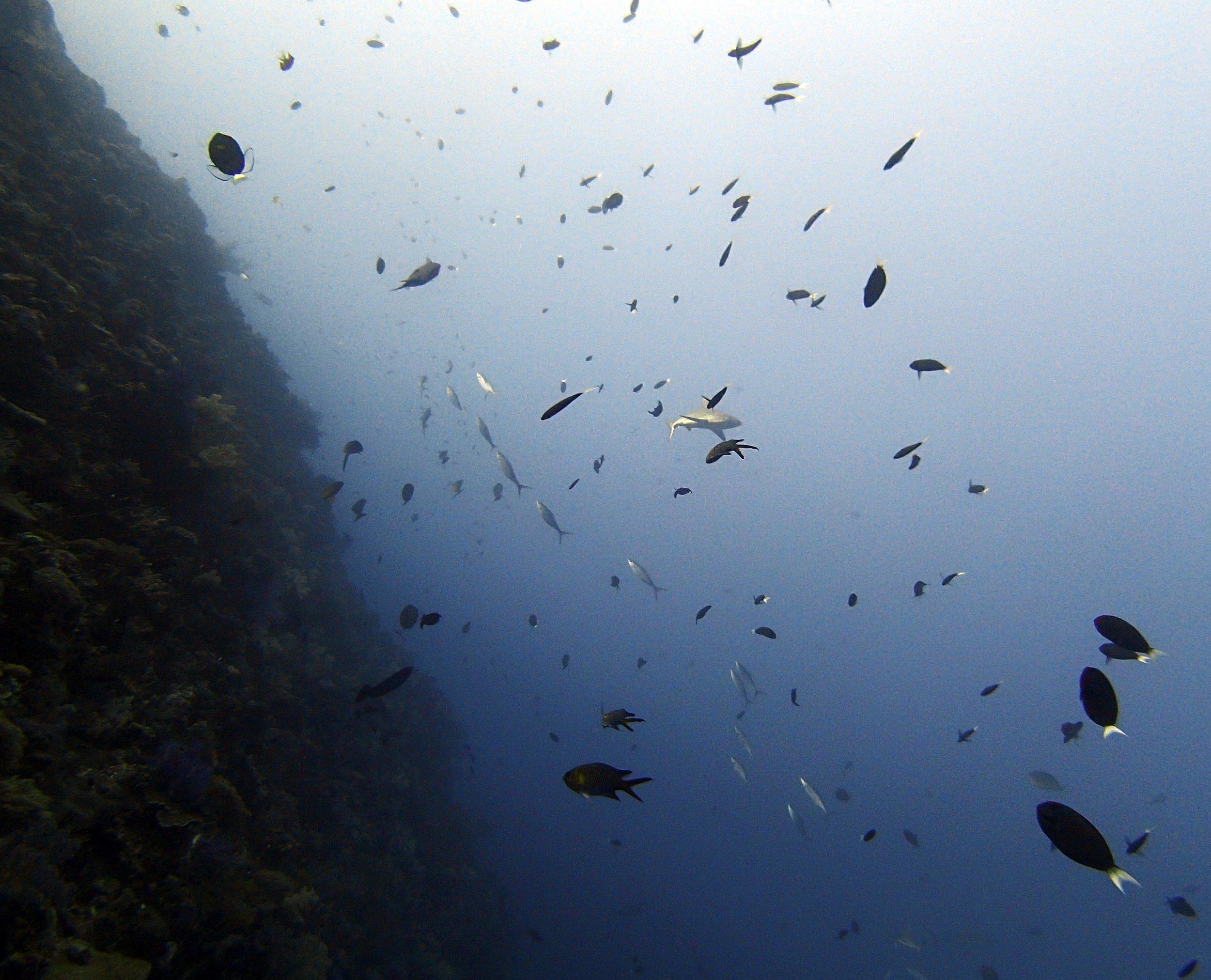 wall of fish.jpg